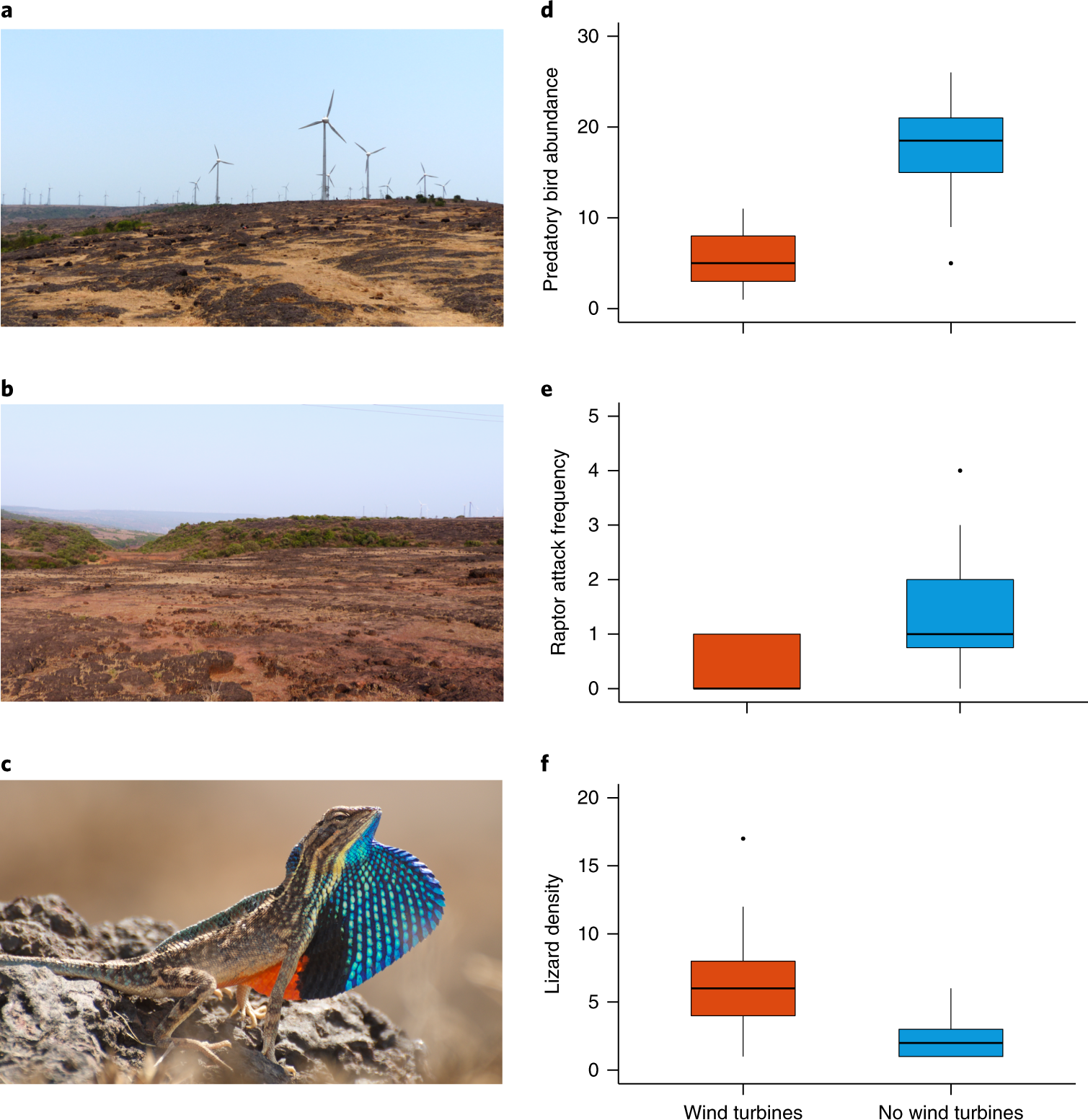 Wind farms have cascading impacts on ecosystems across trophic
