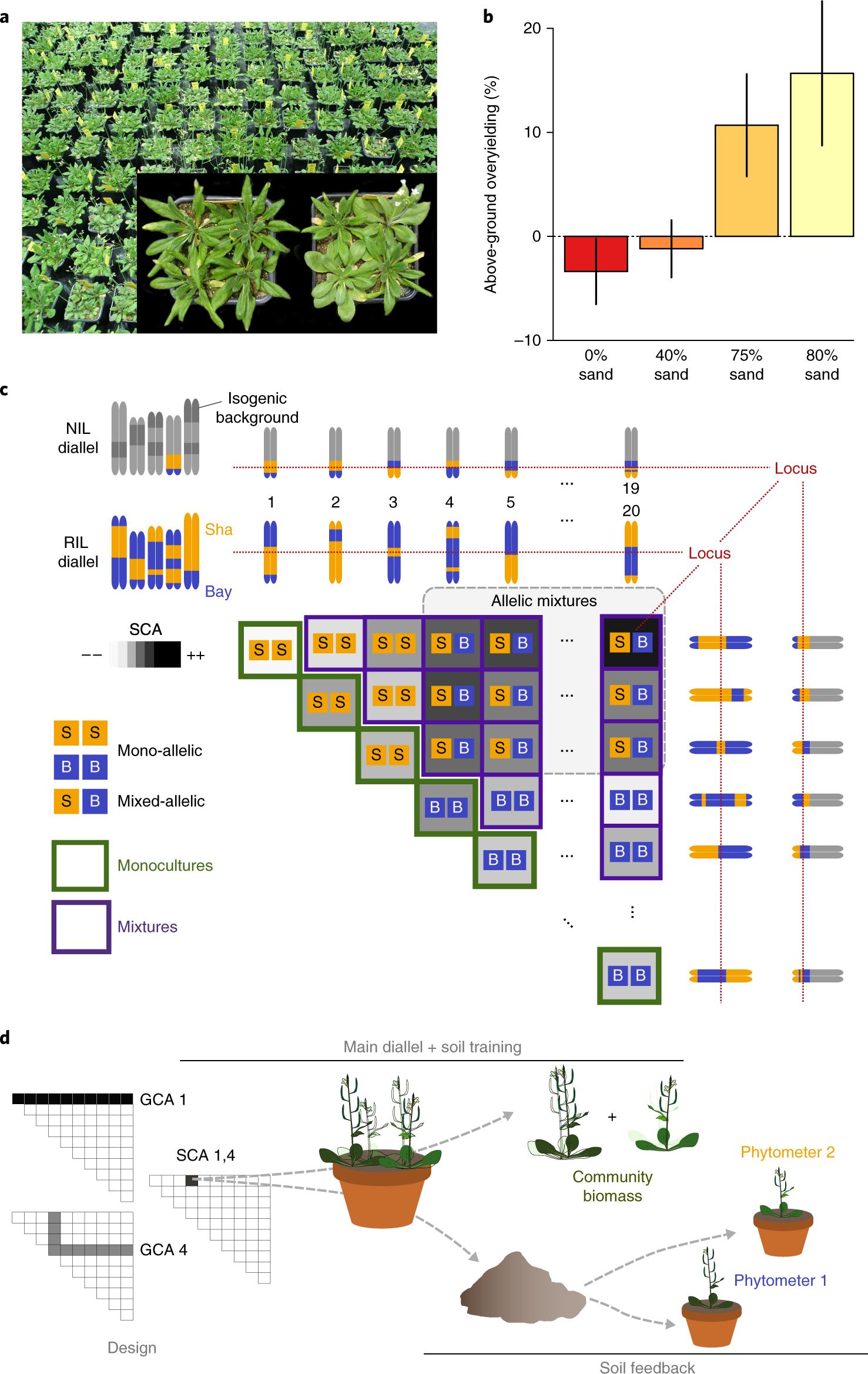 A plant biodiversity effect resolved to a single chromosomal region