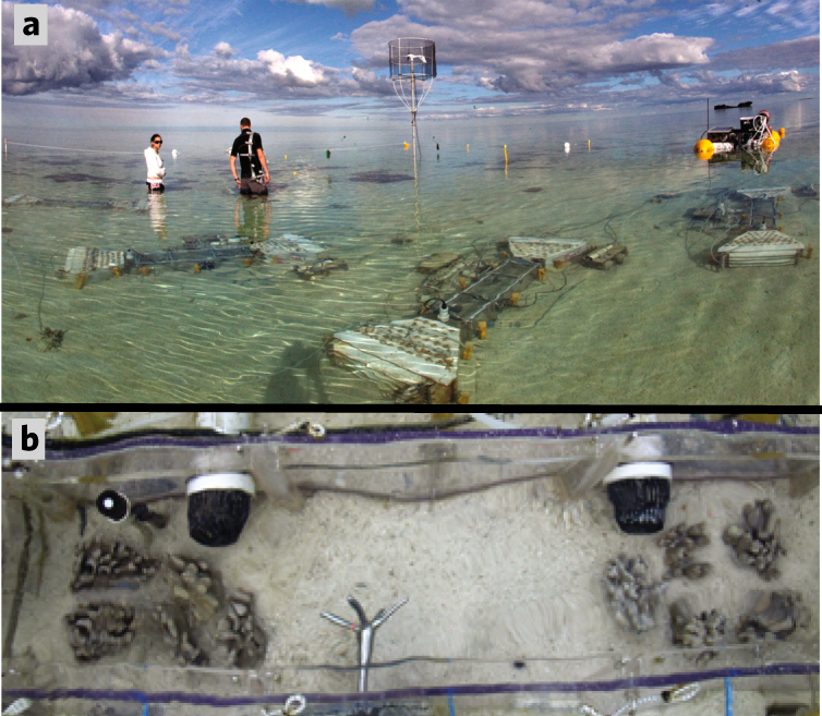 Living coral tissue slows skeletal dissolution related to ocean acidif