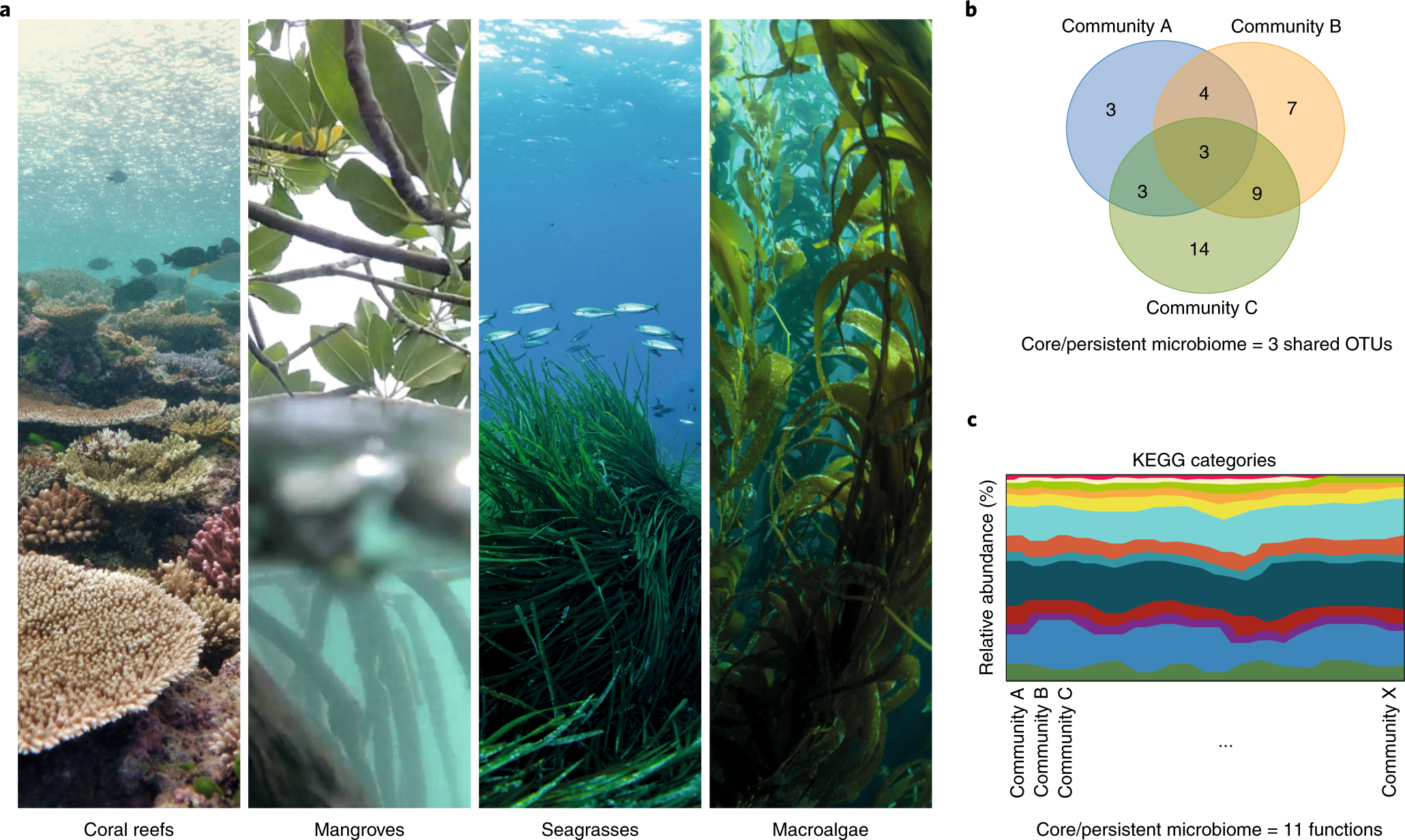 A horizon scan of priorities for coastal marine microbiome research