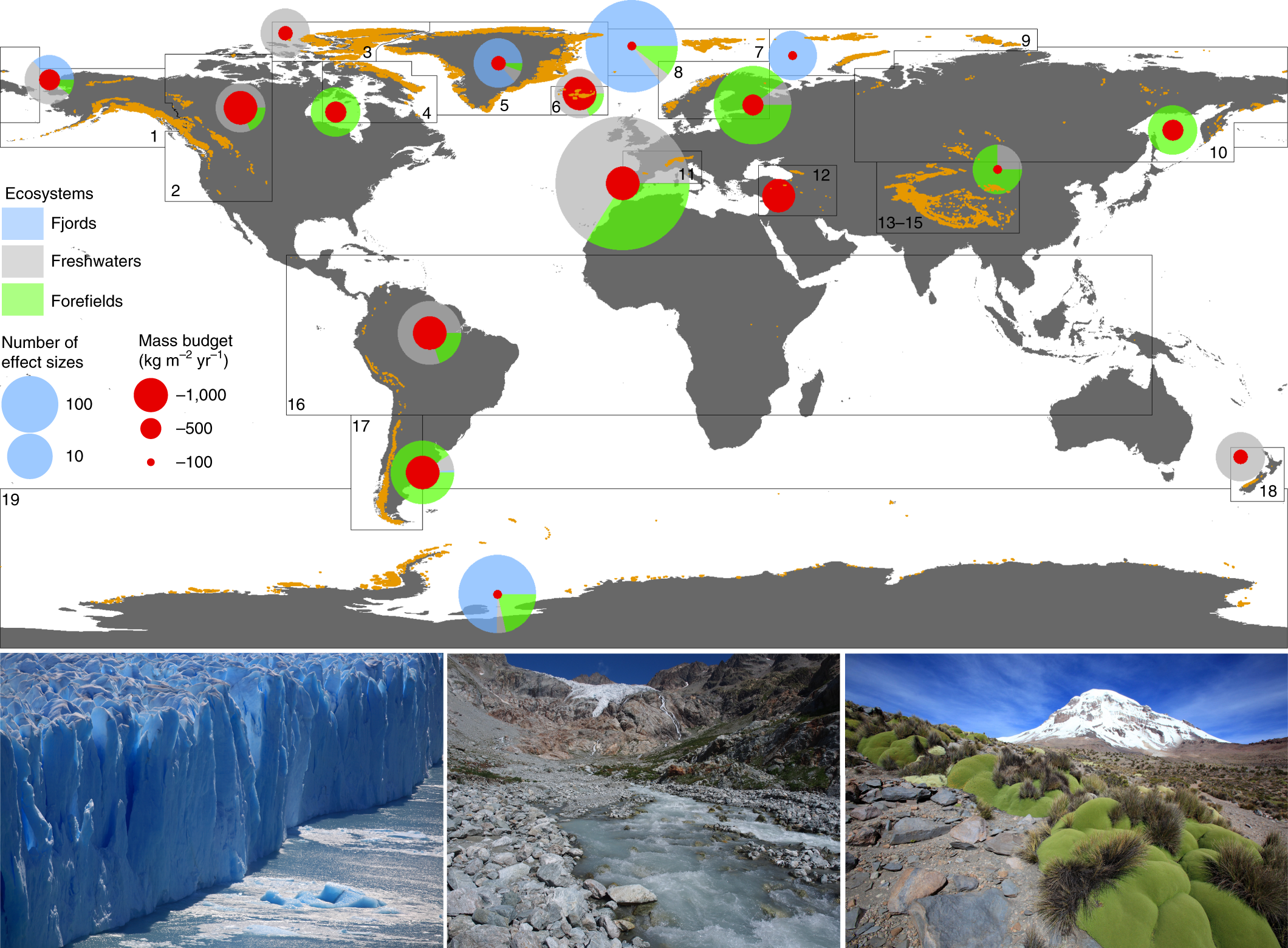 A global synthesis of biodiversity responses to glacier retreat