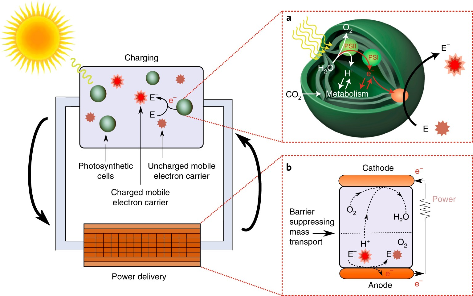 Enhancing Power Density Of Biophotovoltaics By Decoupling Storage Wiring Separate Circuit To Future Room And Delivery Nature Energy