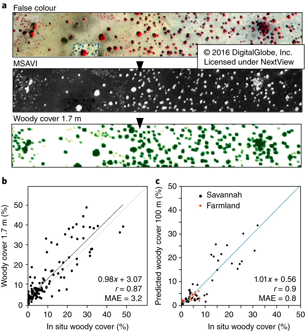 Reduction of tree cover in West African woodlands and promotion in