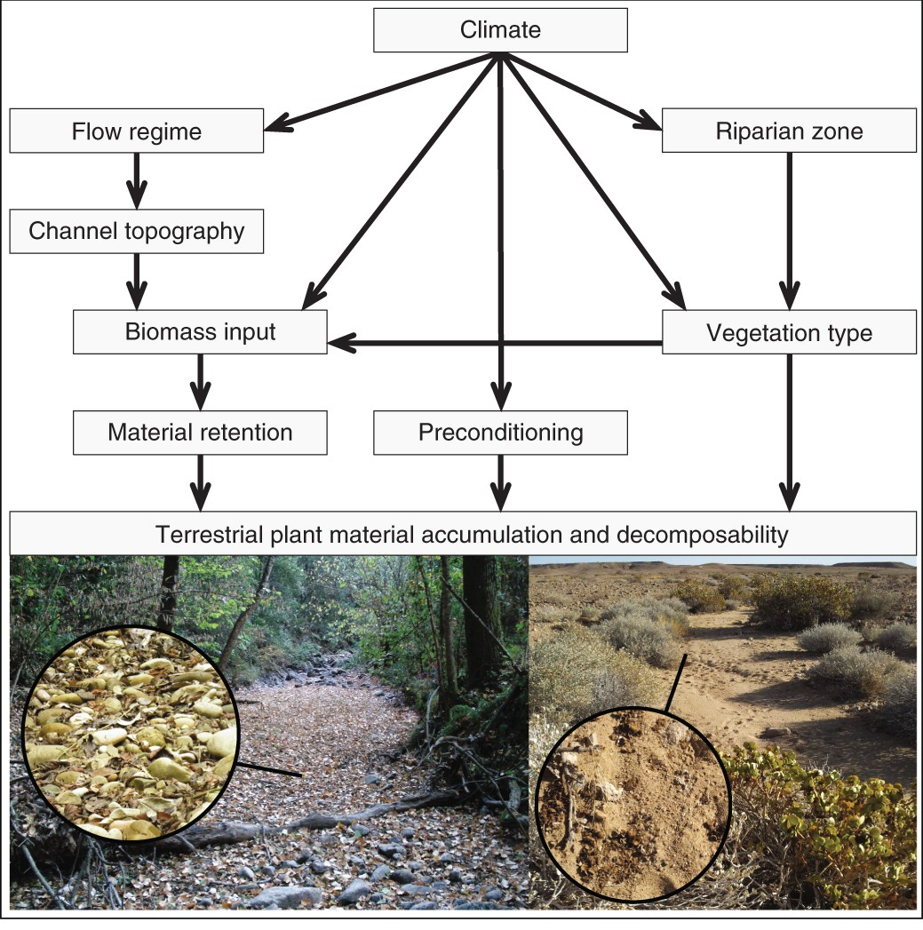 A Global Analysis Of Terrestrial Plant Litter Dynamics In Non Bouncless Switch With Ne555 Perennial Waterways Nature Geoscience