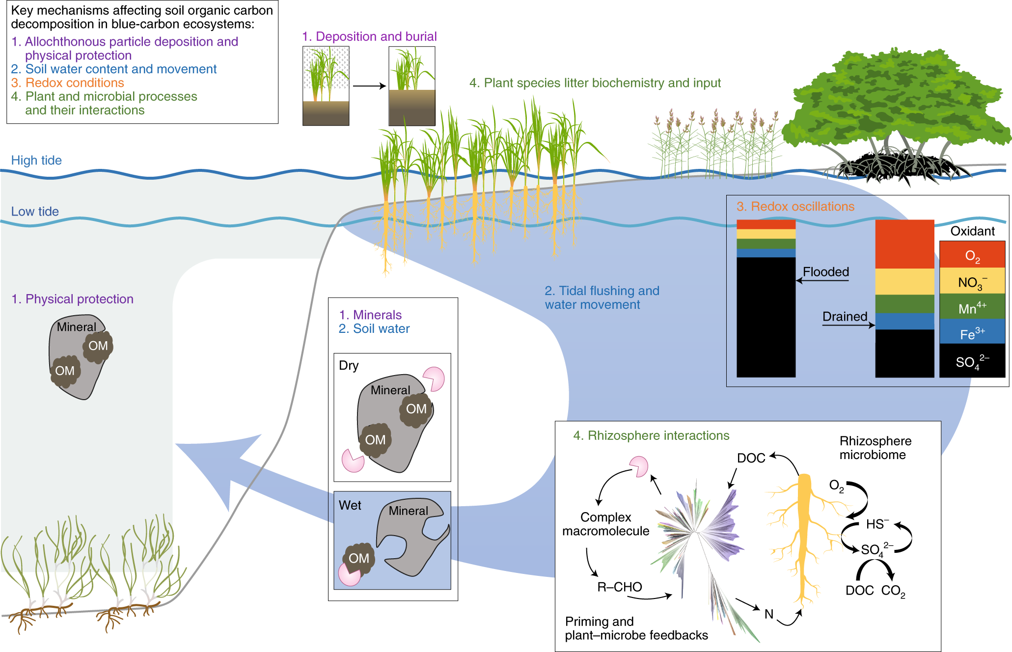 Global-change controls on soil-carbon accumulation and loss
