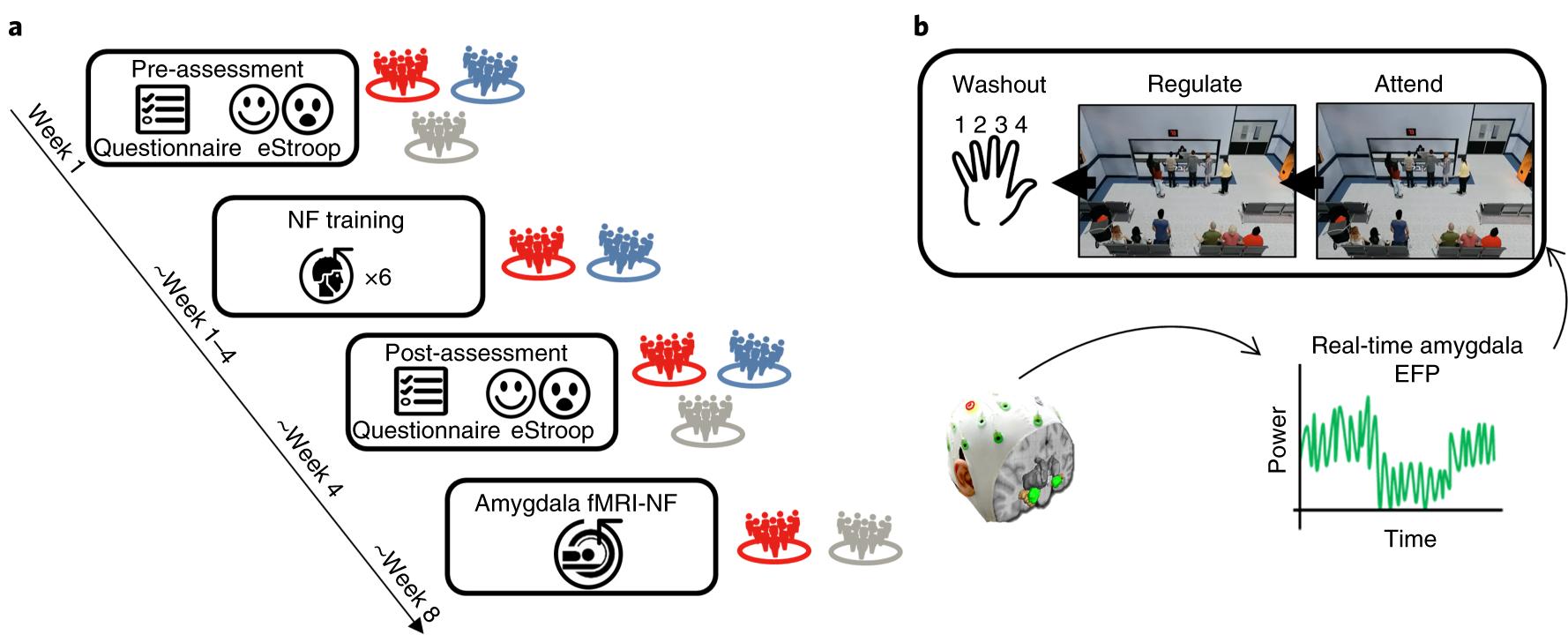Electrical fingerprint of the amygdala guides neurofeedback
