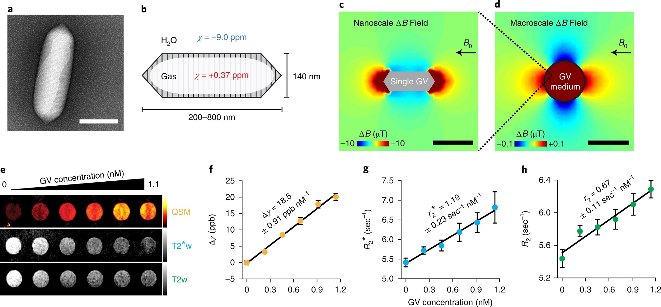 Acoustically Modulated Magnetic Resonance Imaging Of Gas Filled Wave Concepts Limited Electronic Circuit Design Simulation Software Protein Nanostructures Nature Materials
