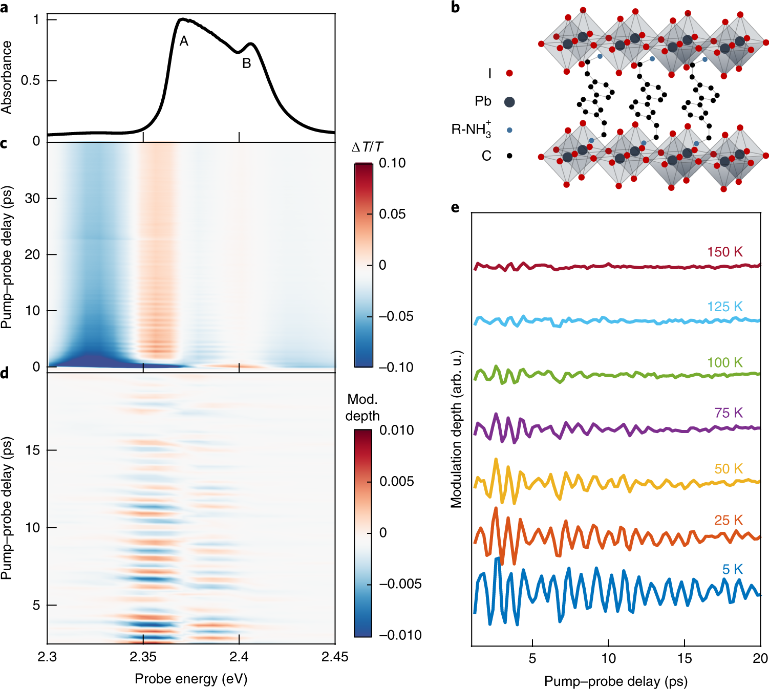 Phonon coherences reveal the polaronic character of excitons in two