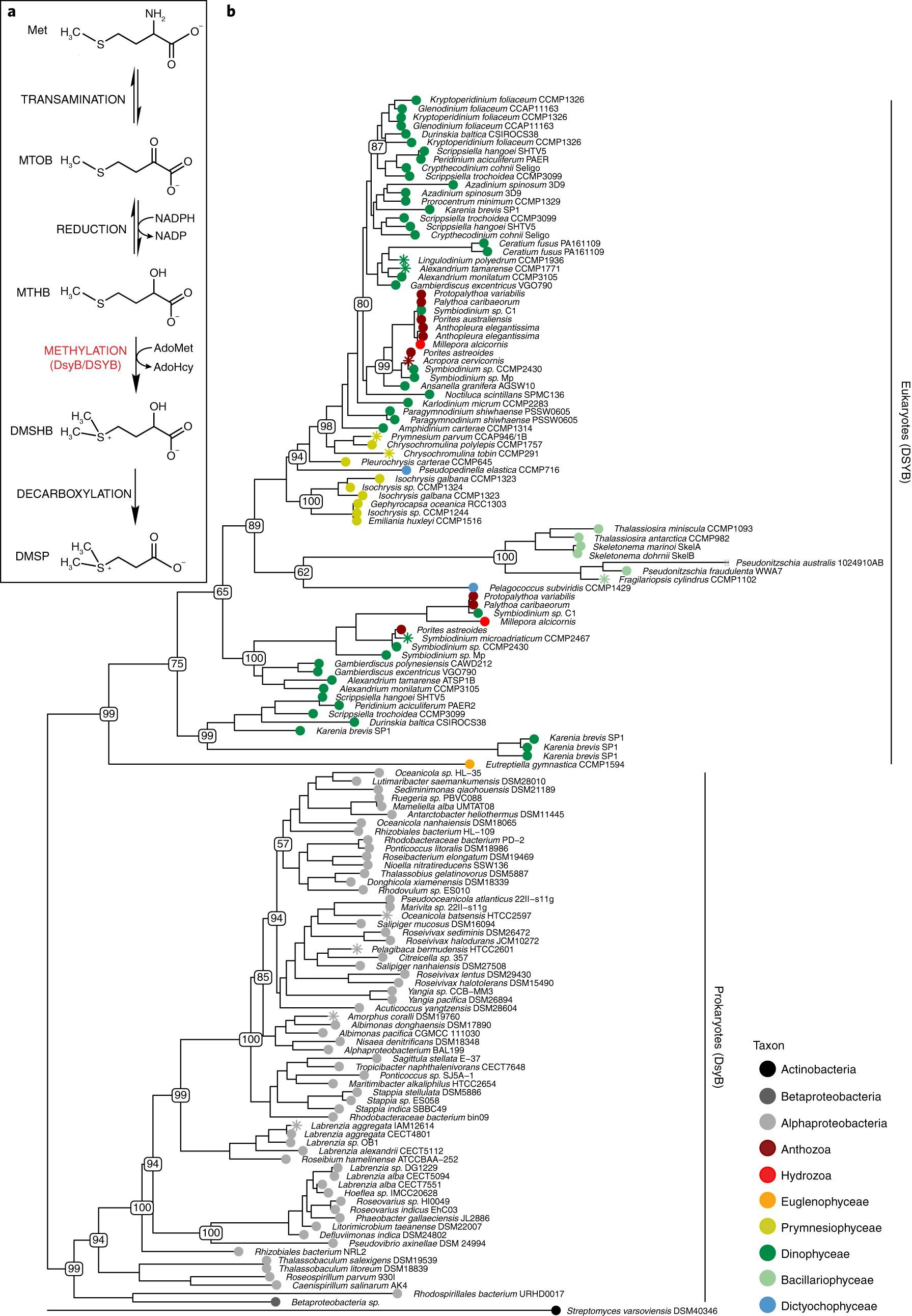 DSYB catalyses the key step of dimethylsulfoniopropionate