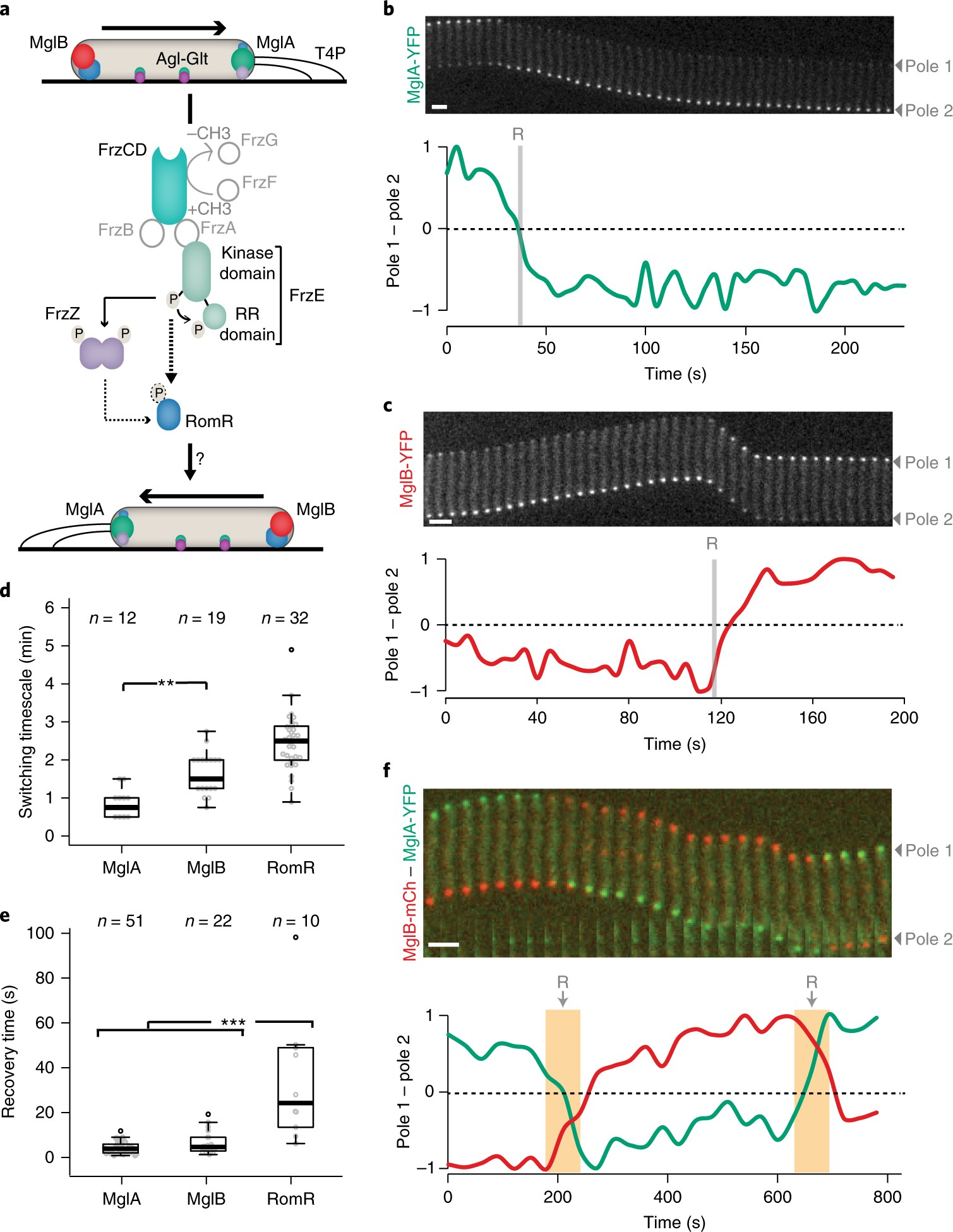 A gated relaxation oscillator mediated by FrzX controls