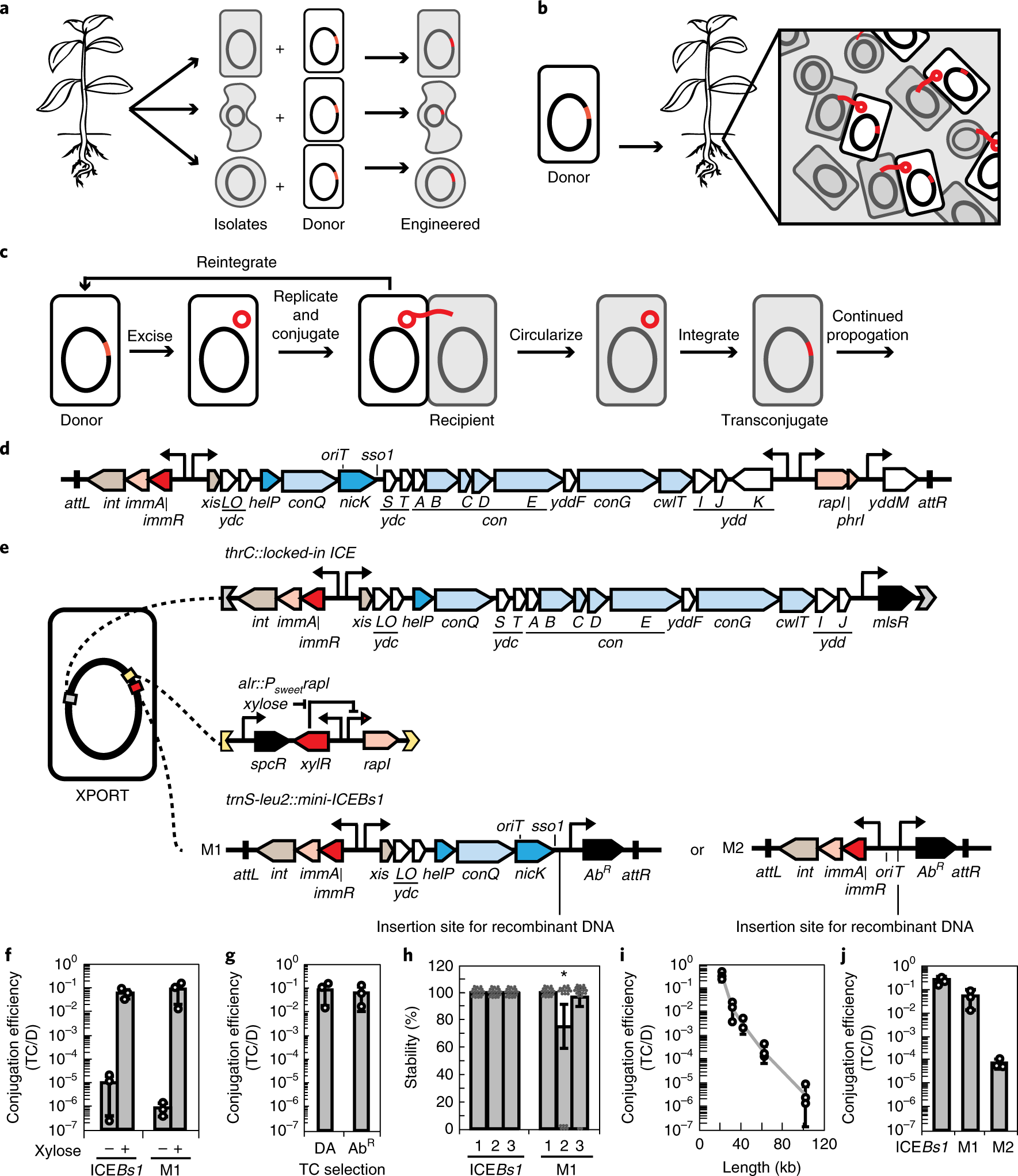 Engineered Integrative And Conjugative Elements For Efficient Seven Segment Counter Display Circuit Mains Failure Alarm Inducible Dna Transfer To Undomesticated Bacteria Nature Microbiology