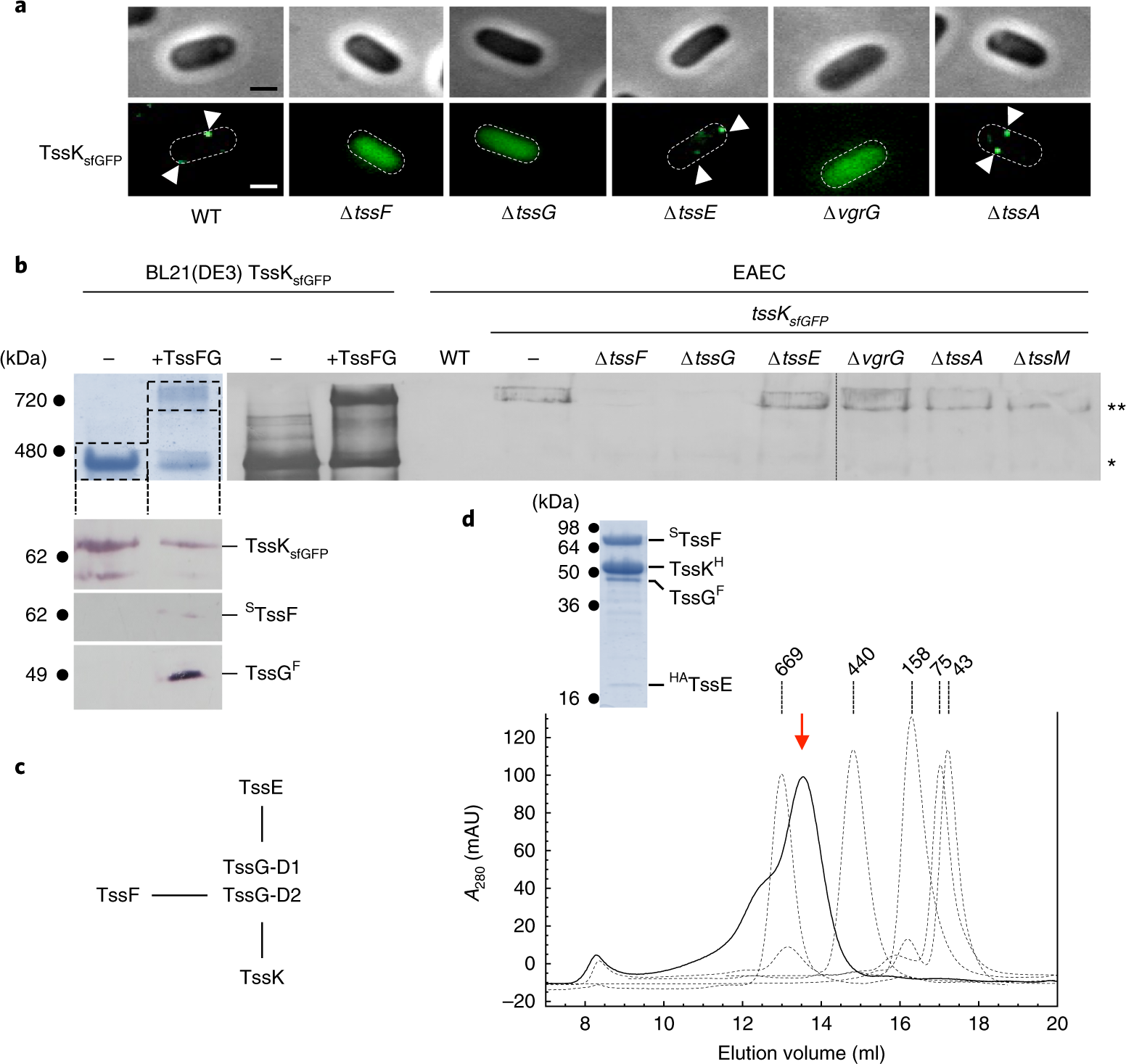 Biogenesis and structure of a type VI secretion baseplate | Nature