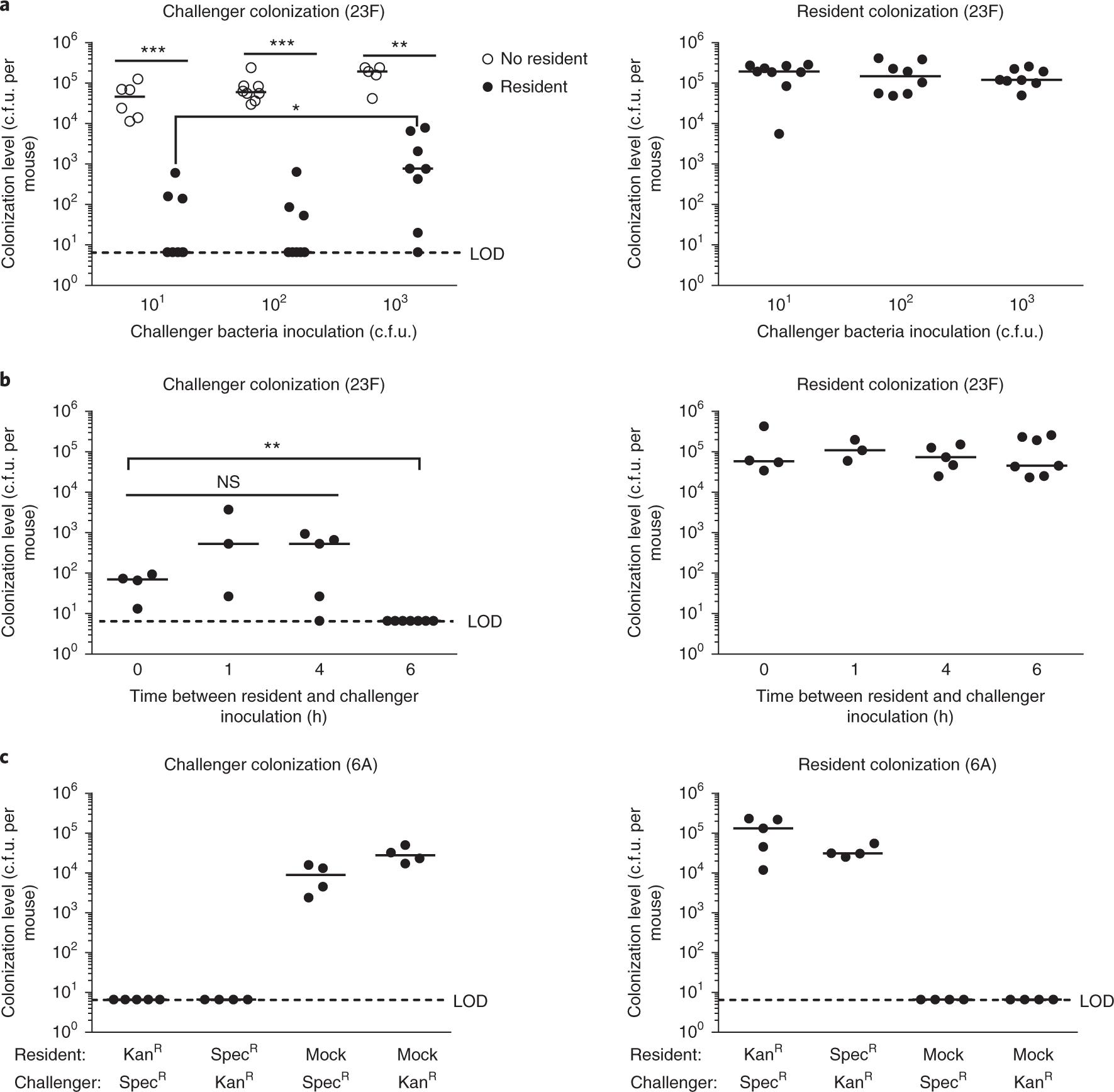 Pneumococcal quorum sensing drives an asymmetric owner–intruder