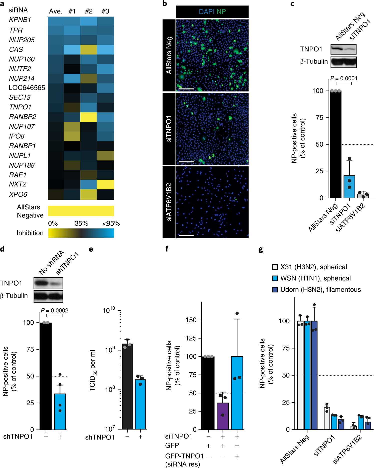 Influenza virus uses transportin 1 for vRNP debundling during cell