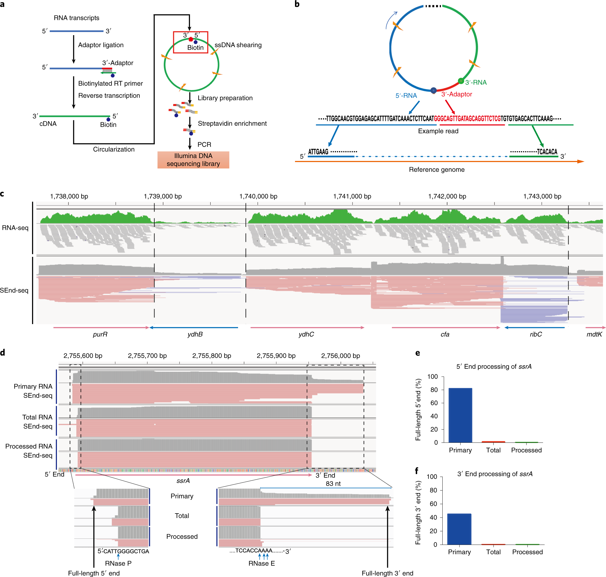 Full-length RNA profiling reveals pervasive bidirectional