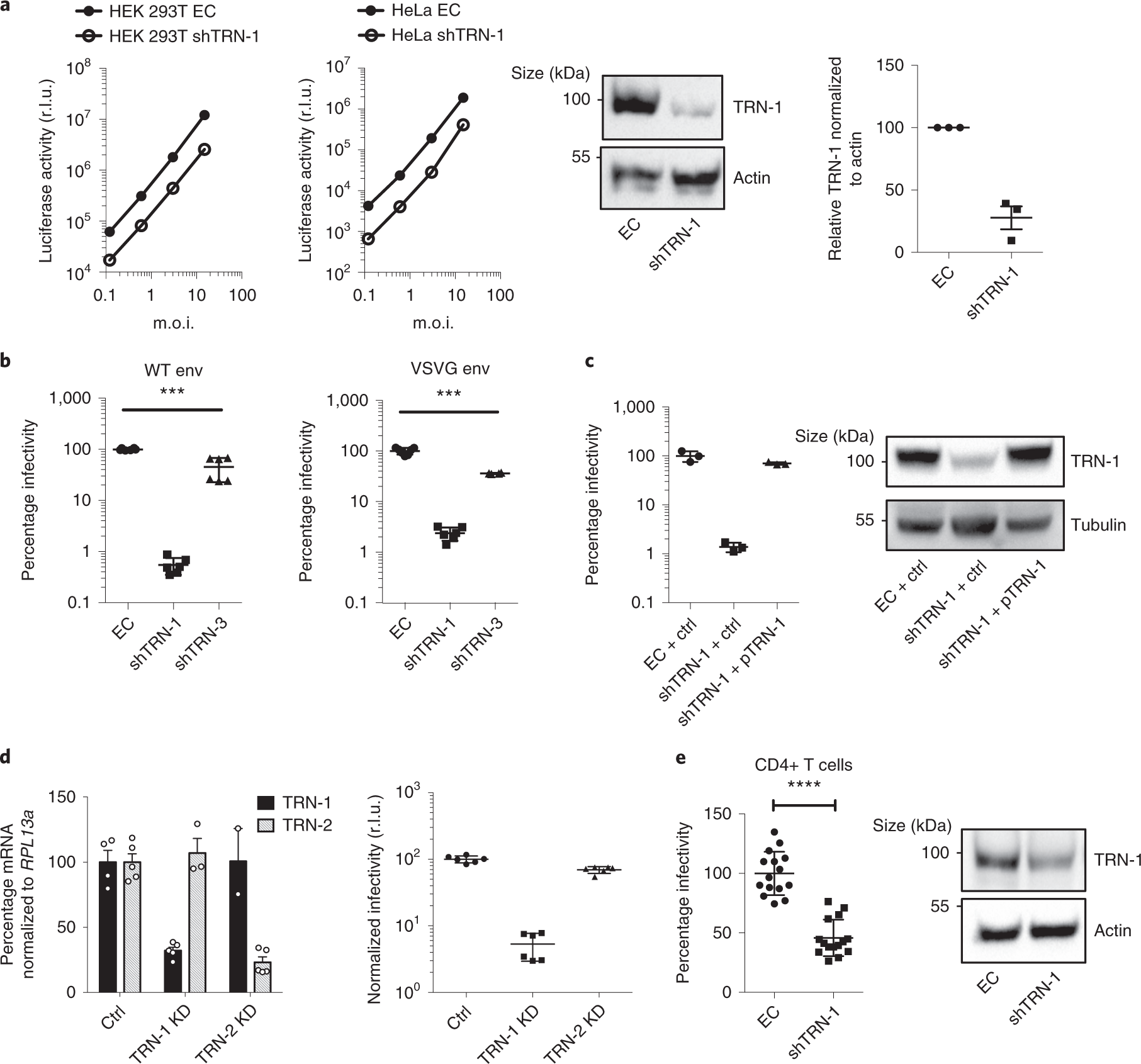 Transportin-1 binds to the HIV-1 capsid via a nuclear localization sig