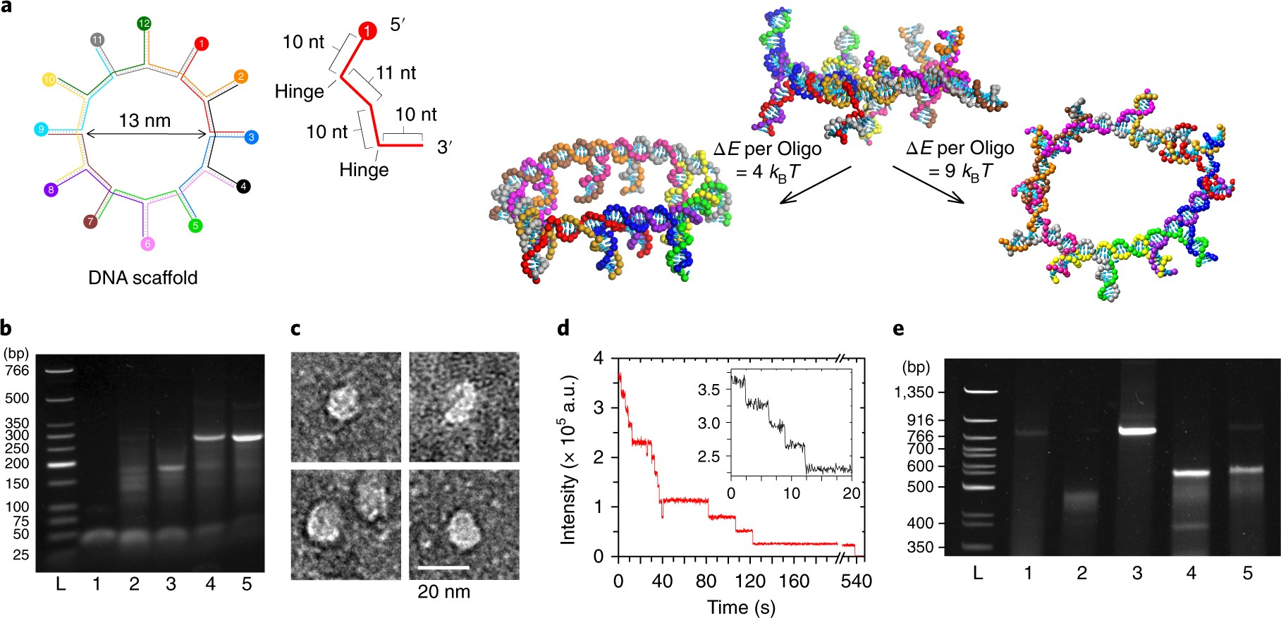 DNA scaffolds support stable and uniform peptide nanopores | Nature ...
