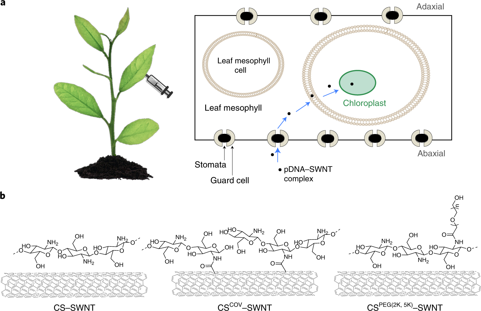 Chloroplast-selective gene delivery and expression in planta