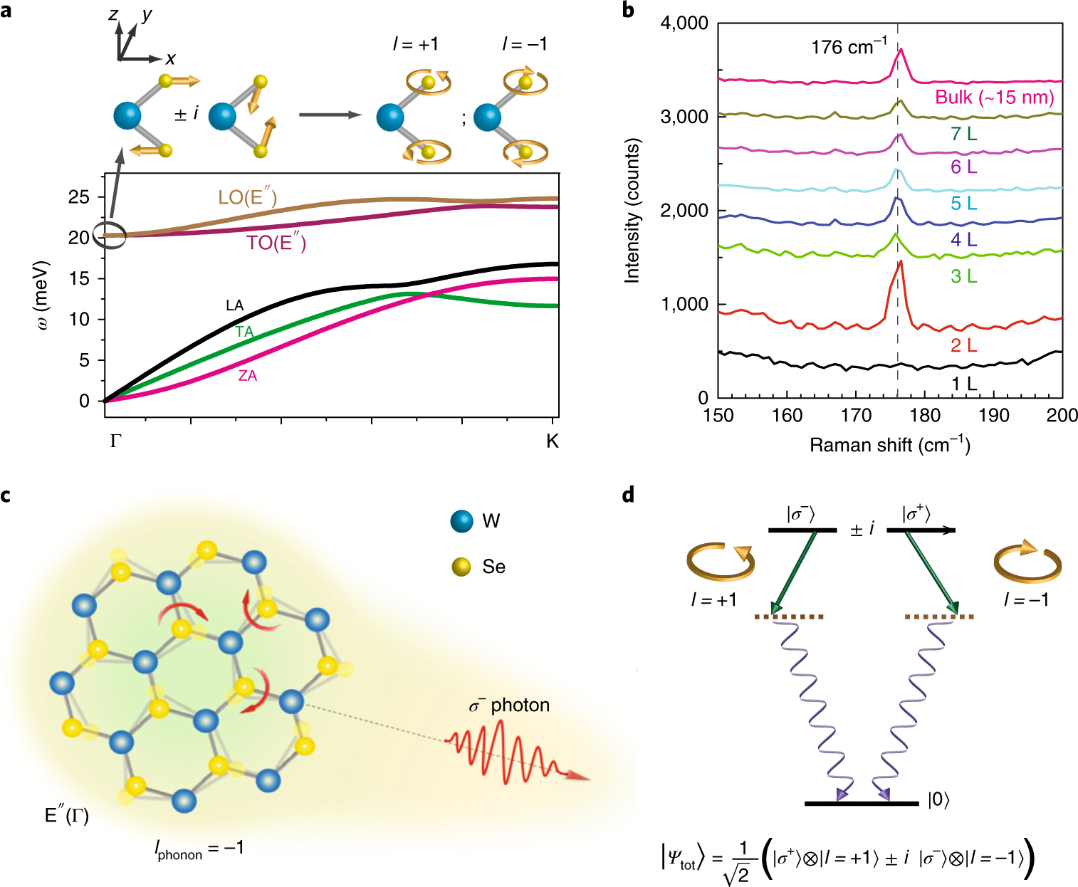 Entanglement of single-photons and chiral phonons in
