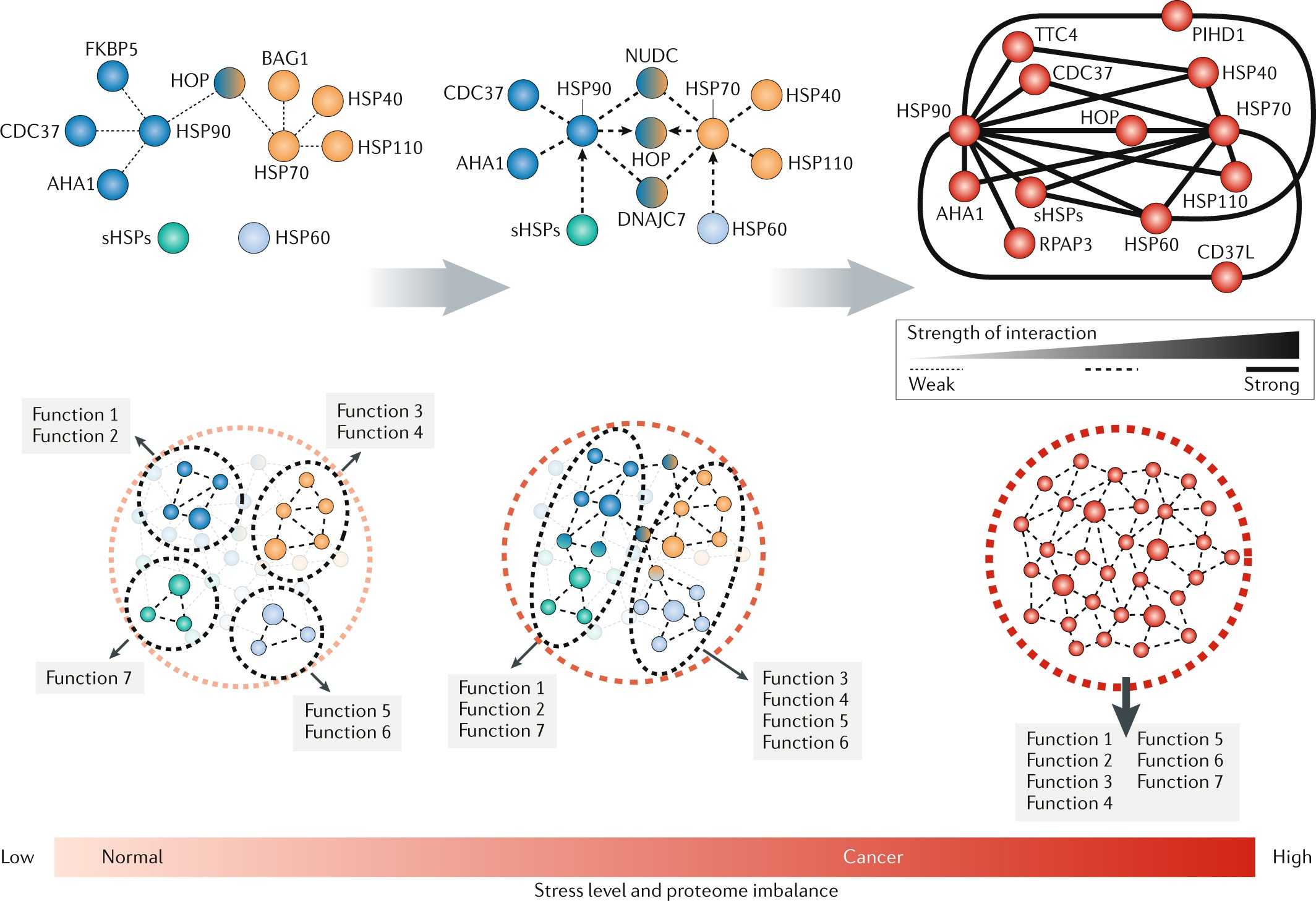 Adapting To Stress Chaperome Networks In Cancer Nature Reviews Hendershot Wiring Diagram
