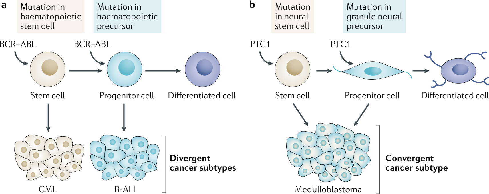 stem cell fate in cancer growth, progression and therapy