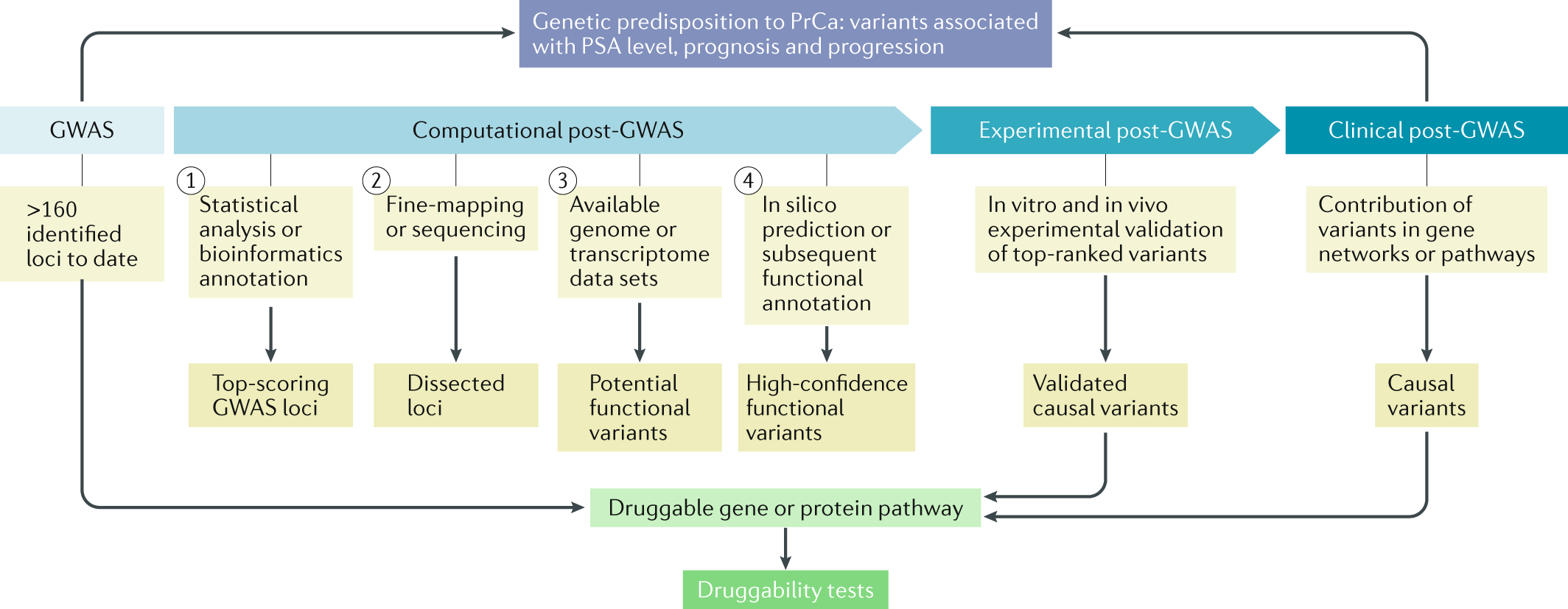 Post-GWAS in prostate cancer: from genetic association to