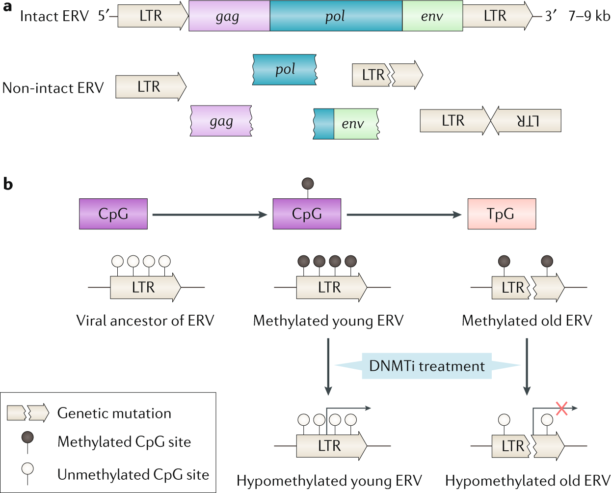 Epigenetic therapy in immune-oncology | Nature Reviews Cancer