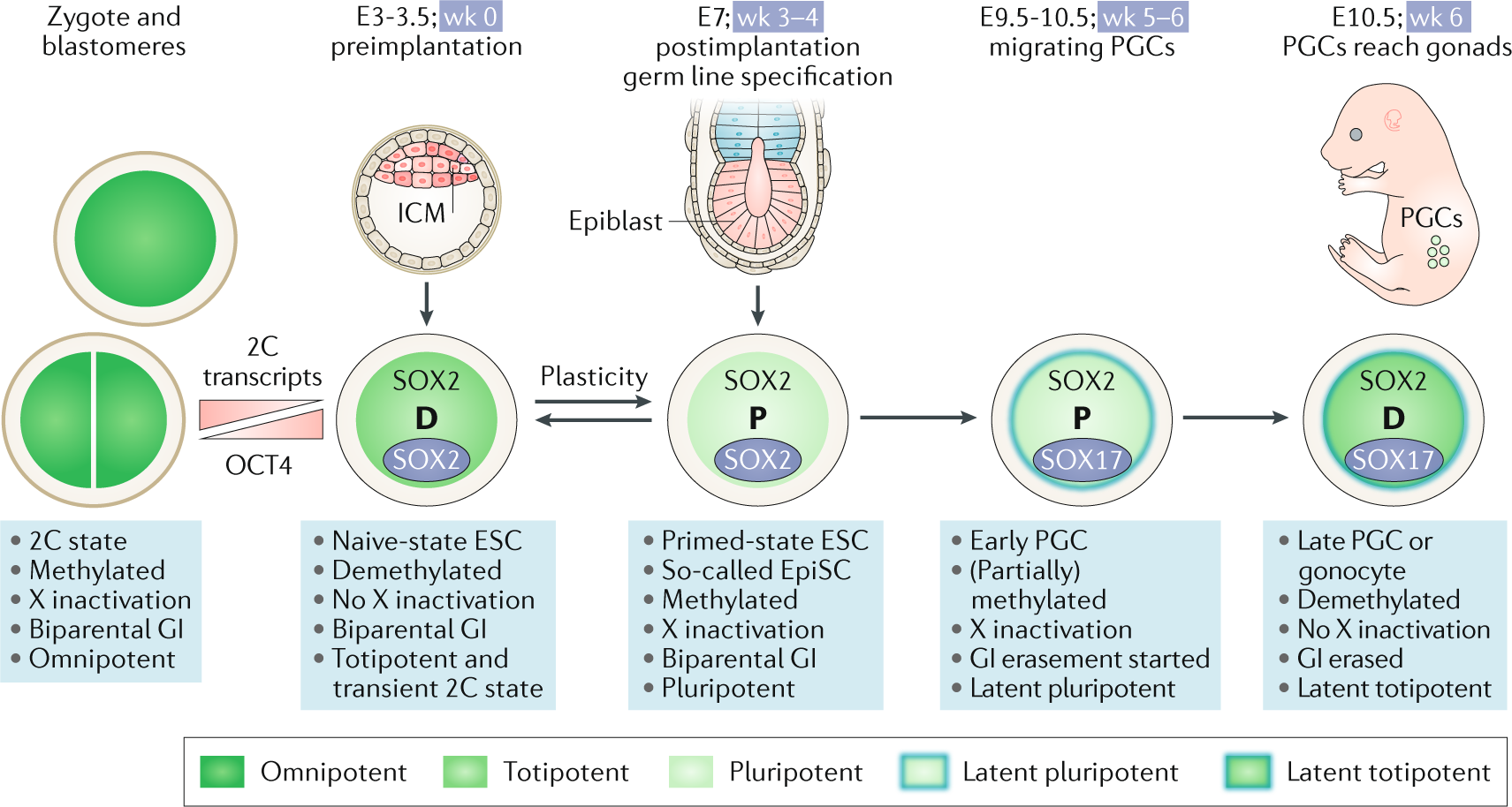 Human germ cell tumours from a developmental perspective