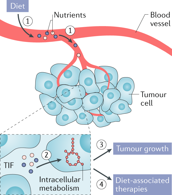 A framework for examining how diet impacts tumour metabolism