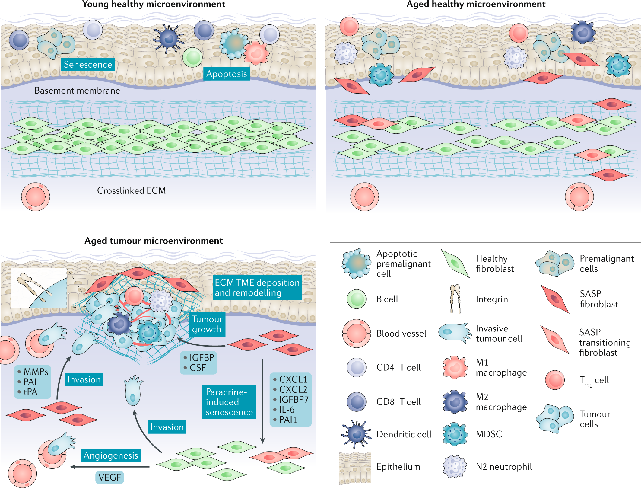 How the ageing microenvironment influences tumour progression