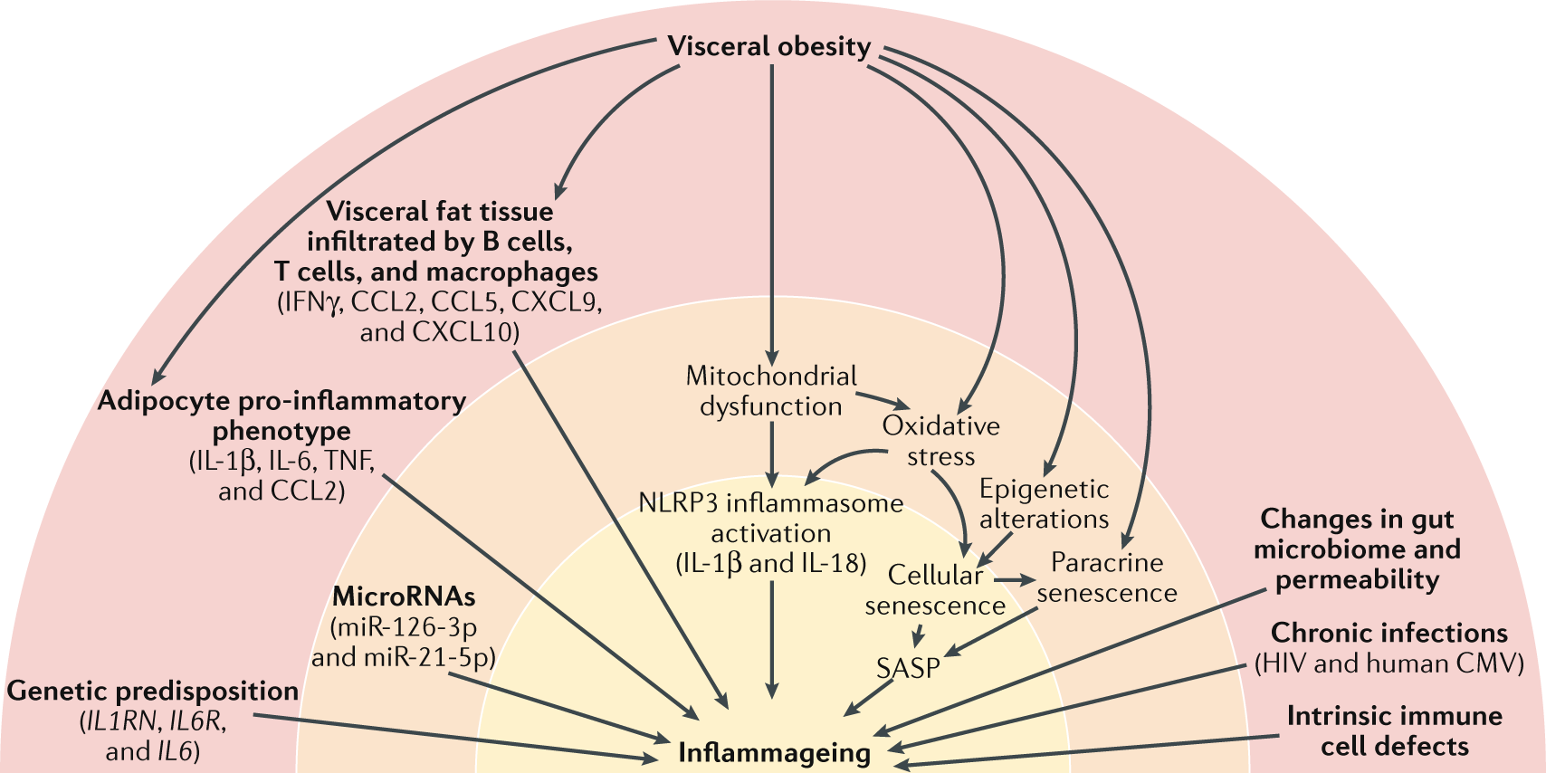 Inflammageing Chronic Inflammation In Ageing Cardiovascular Gibson Es 175 Wiring Diagram Disease And Frailty Nature Reviews Cardiology
