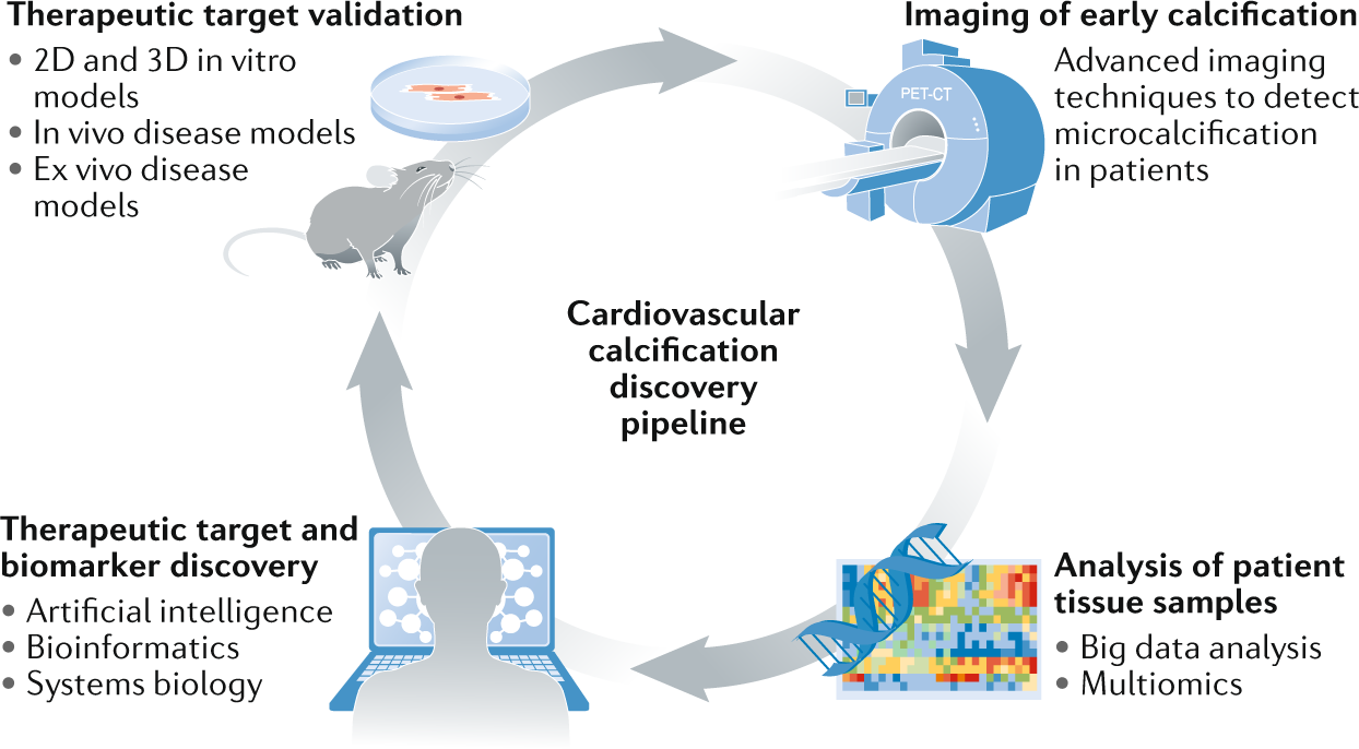 Cardiovascular Calcification Artificial Intelligence And