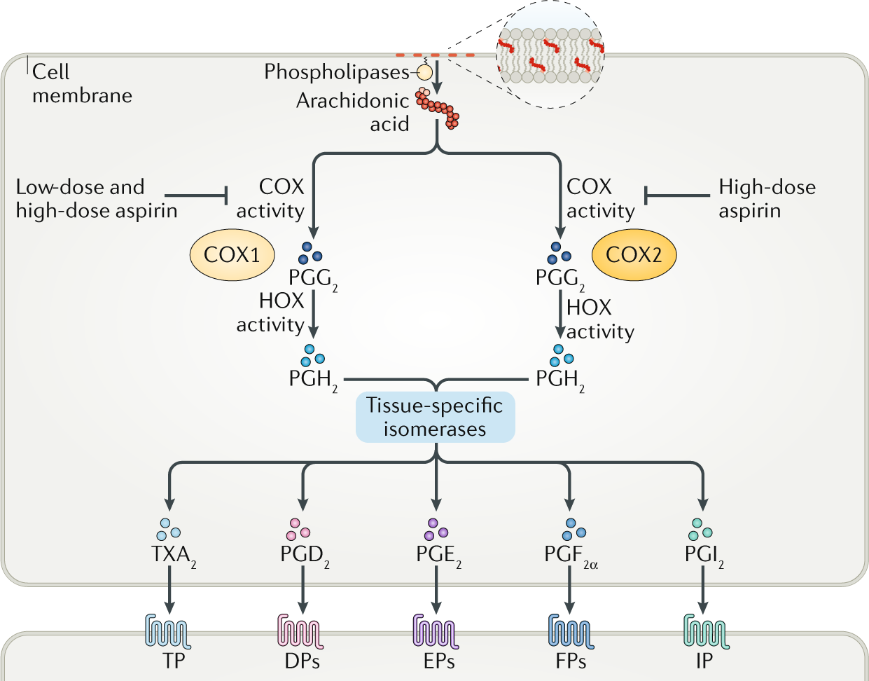 Role of aspirin in primary prevention of cardiovascular disease