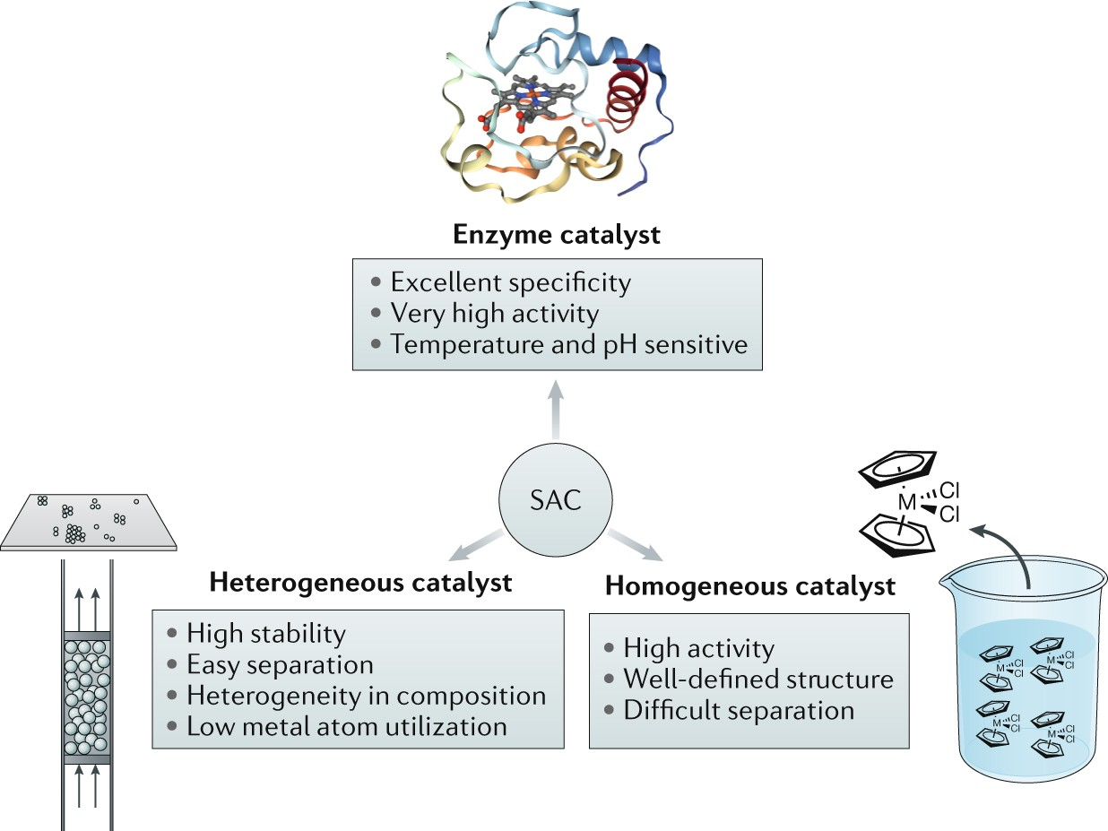 heterogeneous single atom catalysis nature reviews chemistry