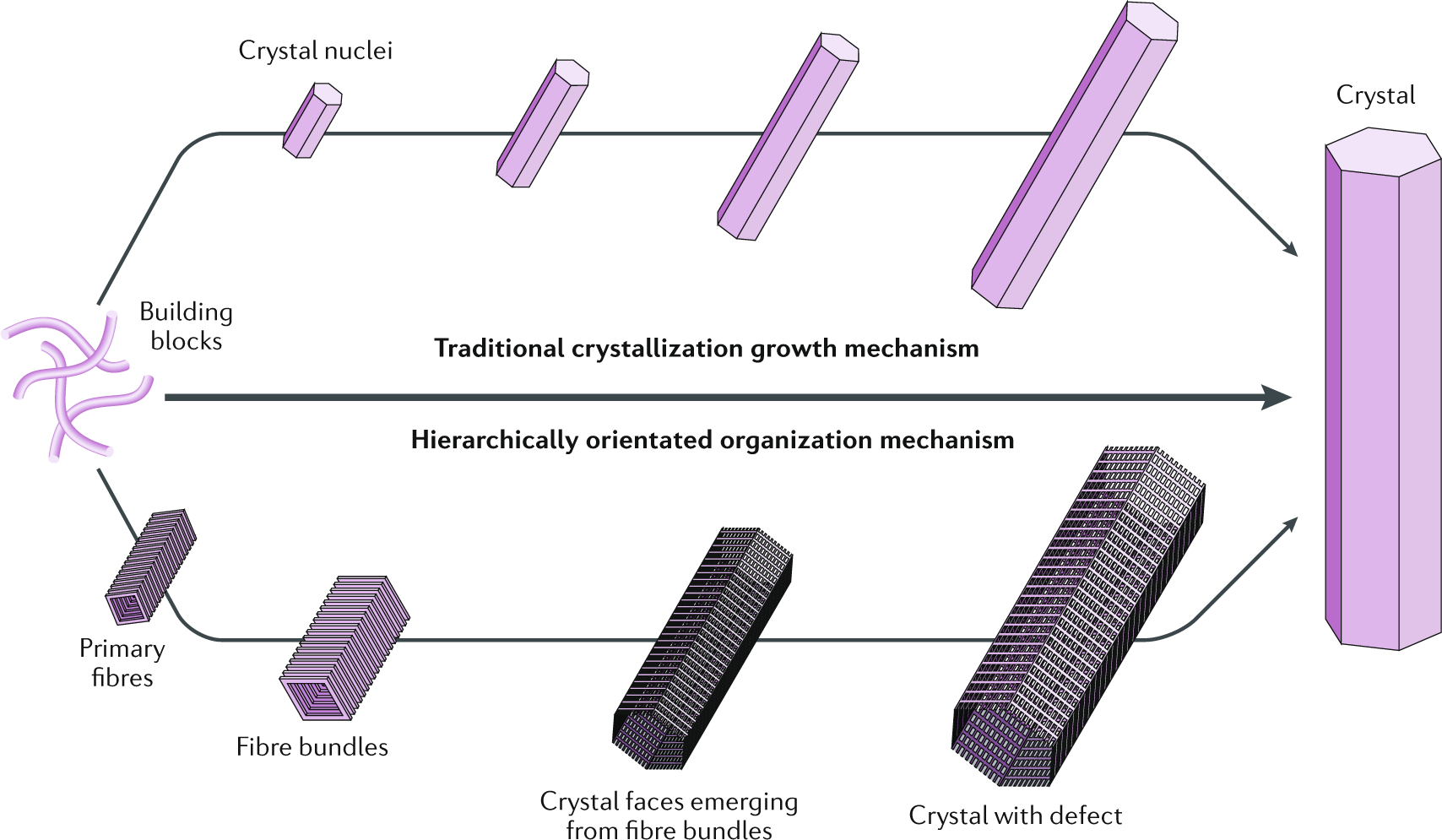 Hierarchically oriented organization in supramolecular peptide cr