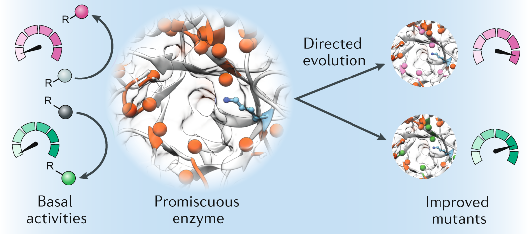 The importance of catalytic promiscuity for enzyme design and evolutio
