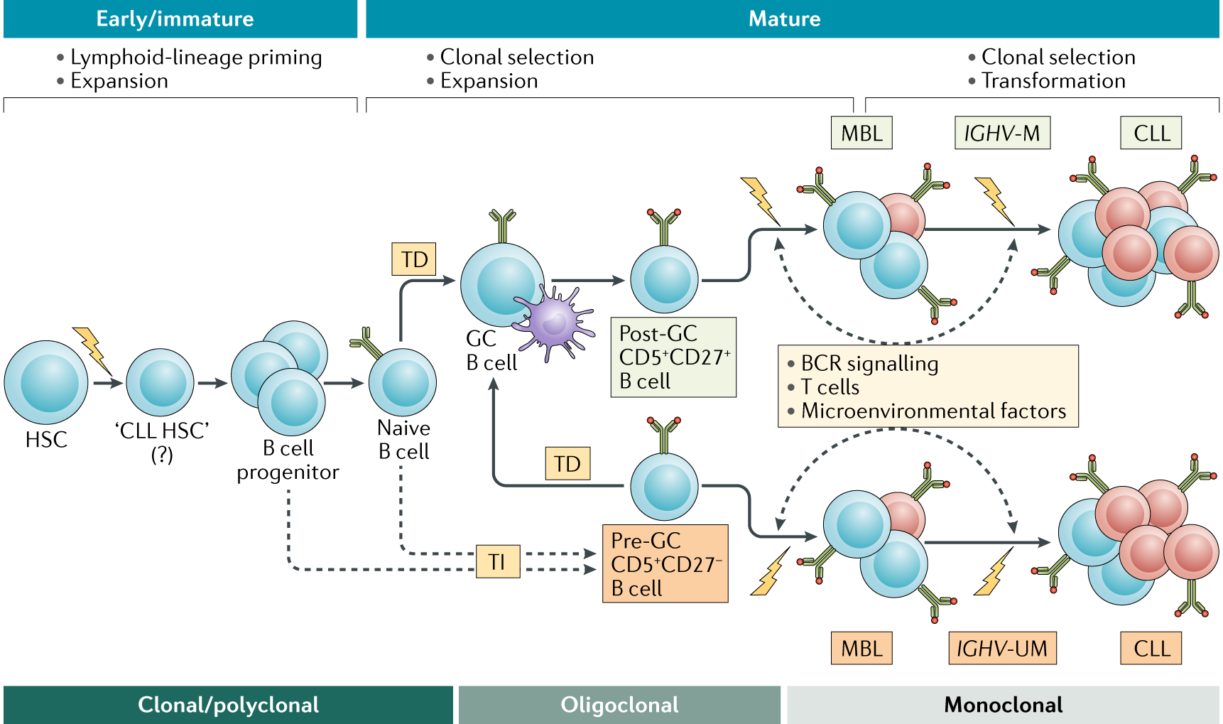 Chronic lymphocytic leukaemia: from genetics to treatment