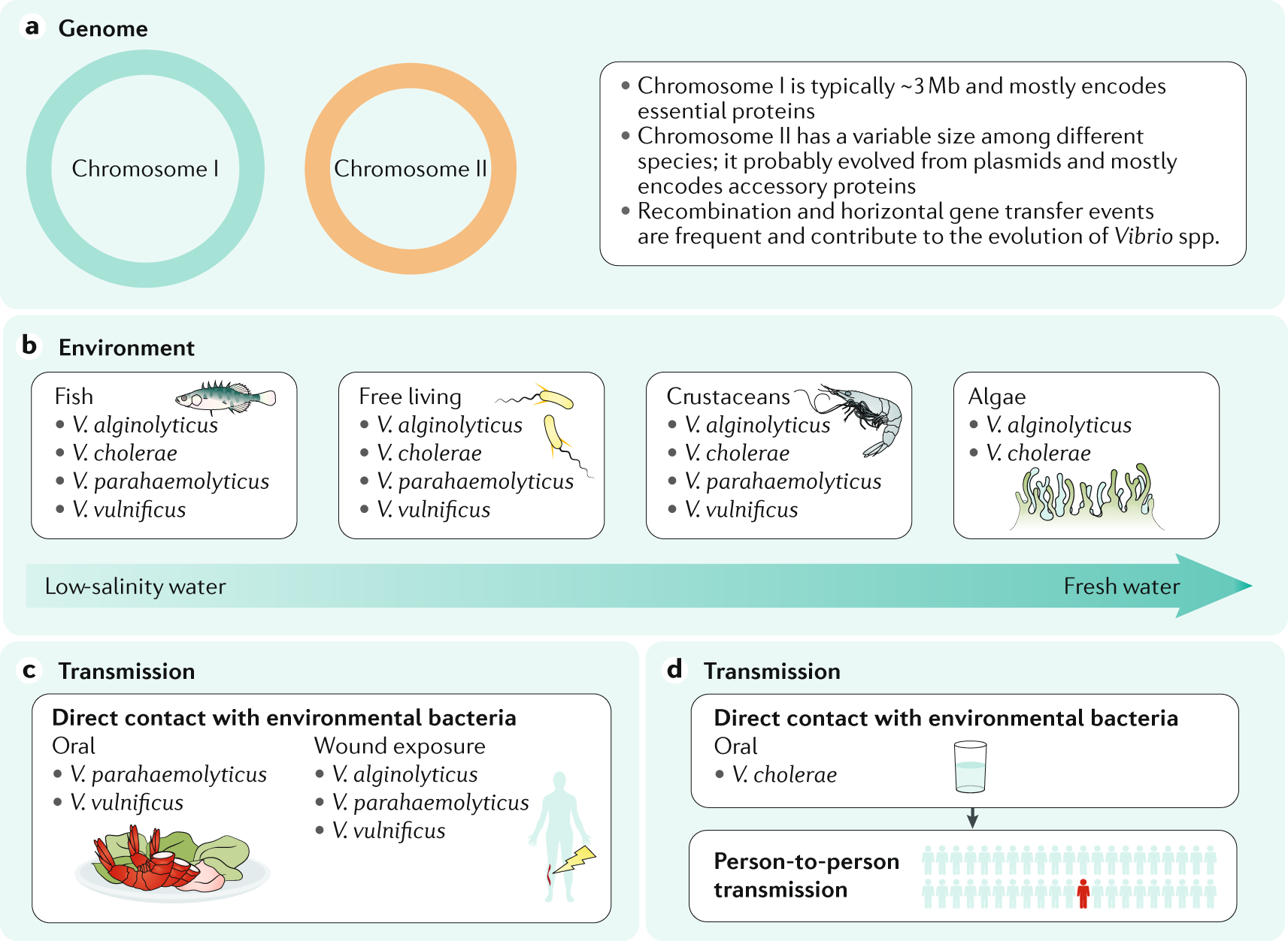 Vibrio spp. infections   Nature Reviews Disease Primers