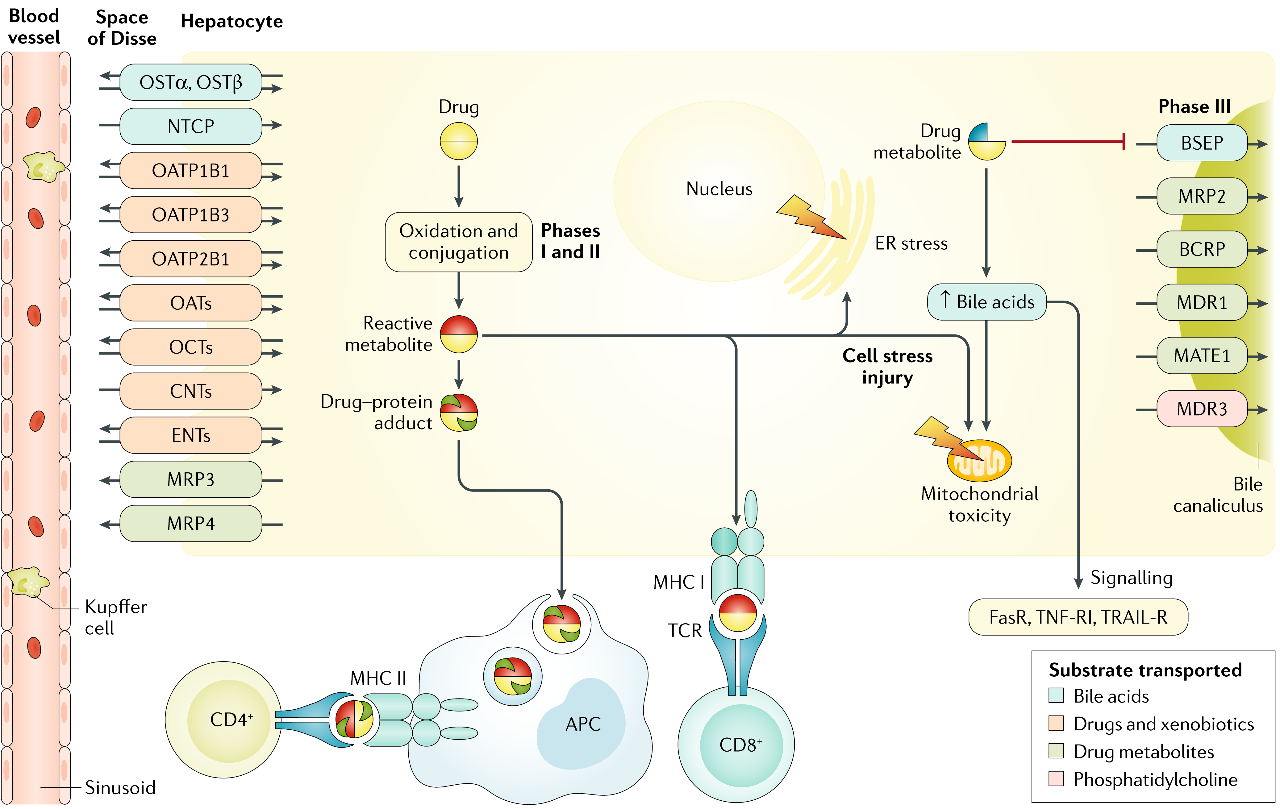 Drug-induced liver injury | Nature Reviews Disease Primers on