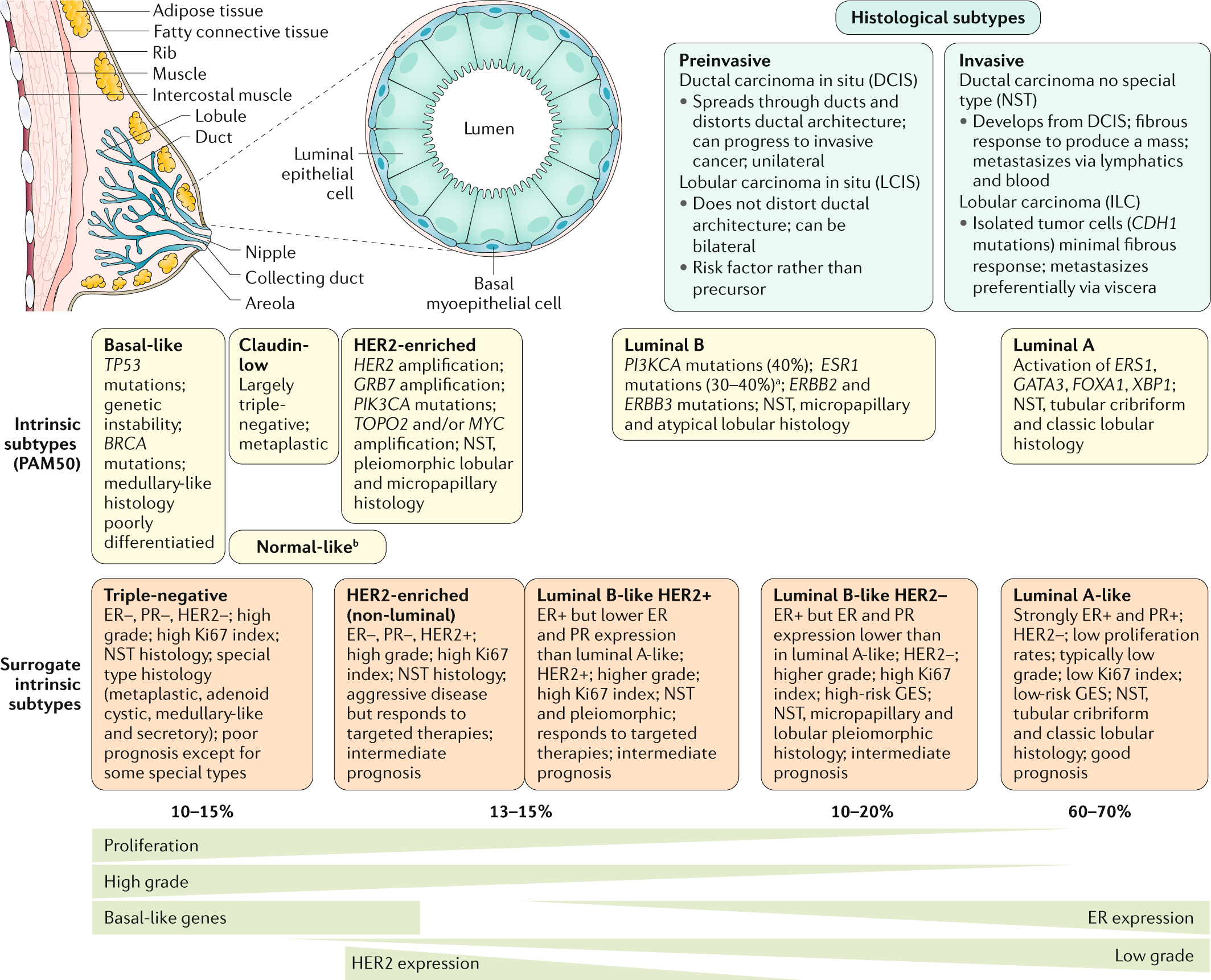 Breast cancer | Nature Reviews Disease
