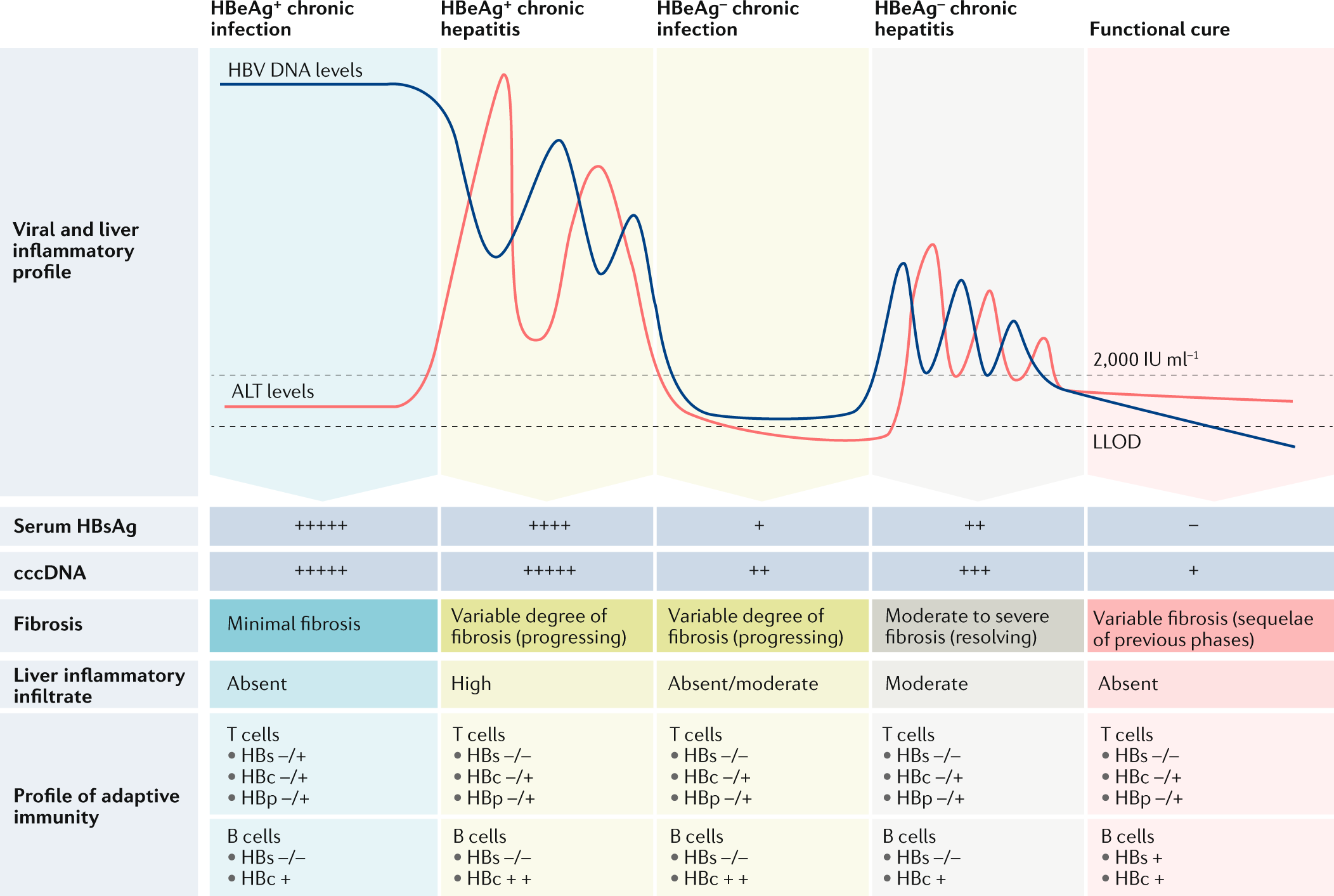 Therapeutic strategies for hepatitis B virus infection: towards a cure