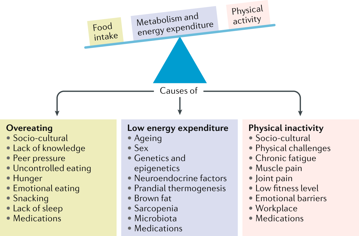 Must Read Ncd Response To Controversial >> Obesity Global Epidemiology And Pathogenesis Nature Reviews