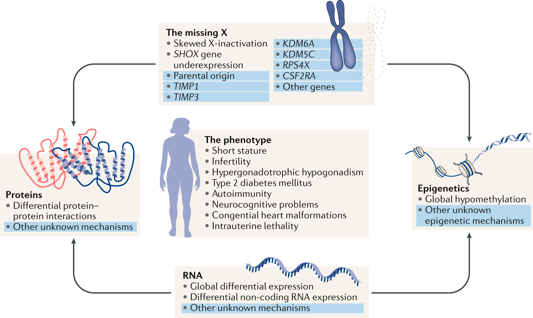 Turner syndrome: mechanisms and management   Nature Reviews