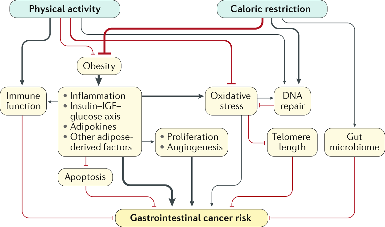 Energy balance and gastrointestinal cancer: risk