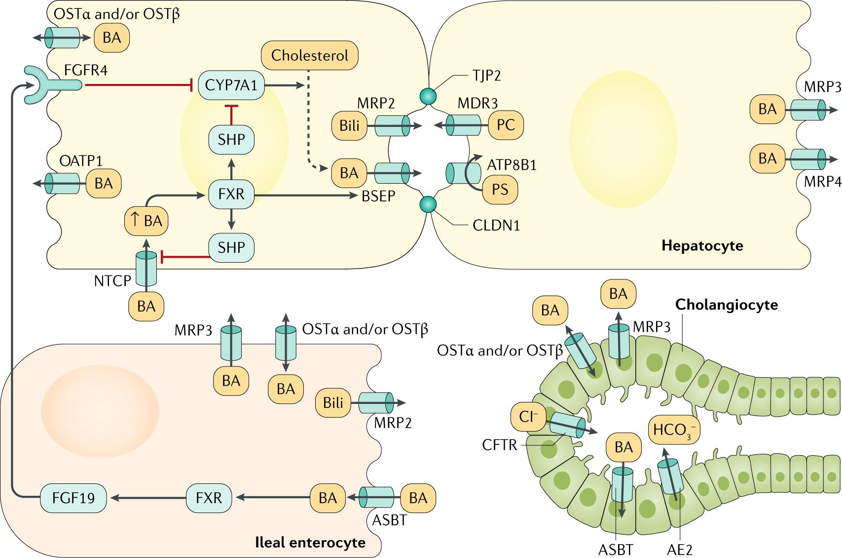 Neonatal cholestasis: emerging molecular diagnostics and potential