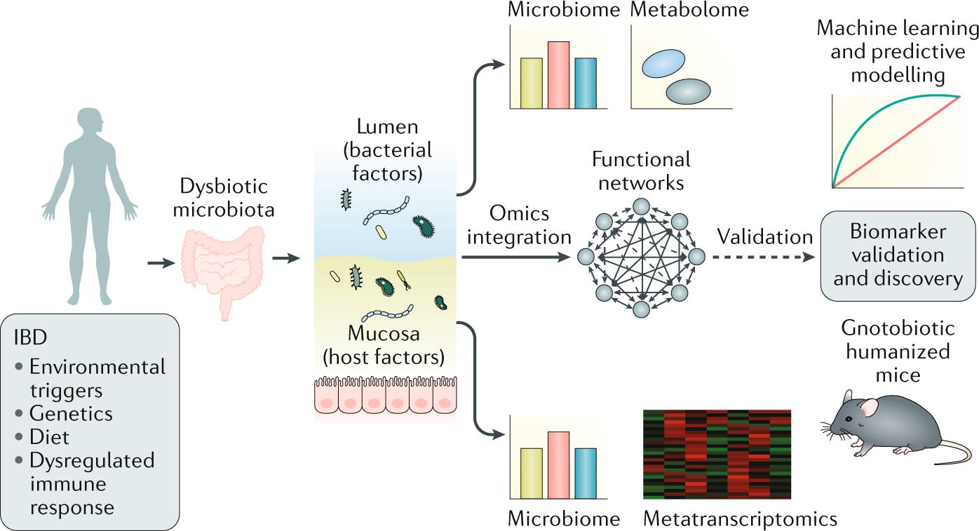 Multi-omics in IBD biomarker discovery: the missing links