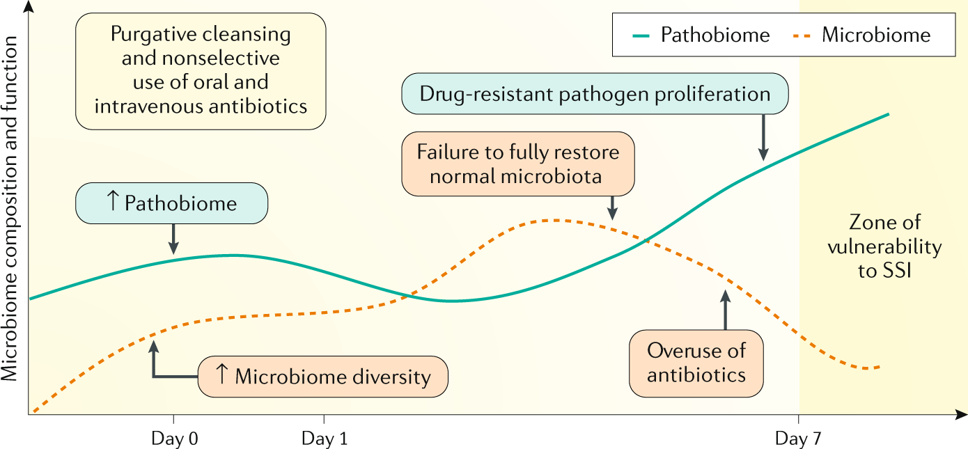 Preparing the bowel for surgery: rethinking the strategy