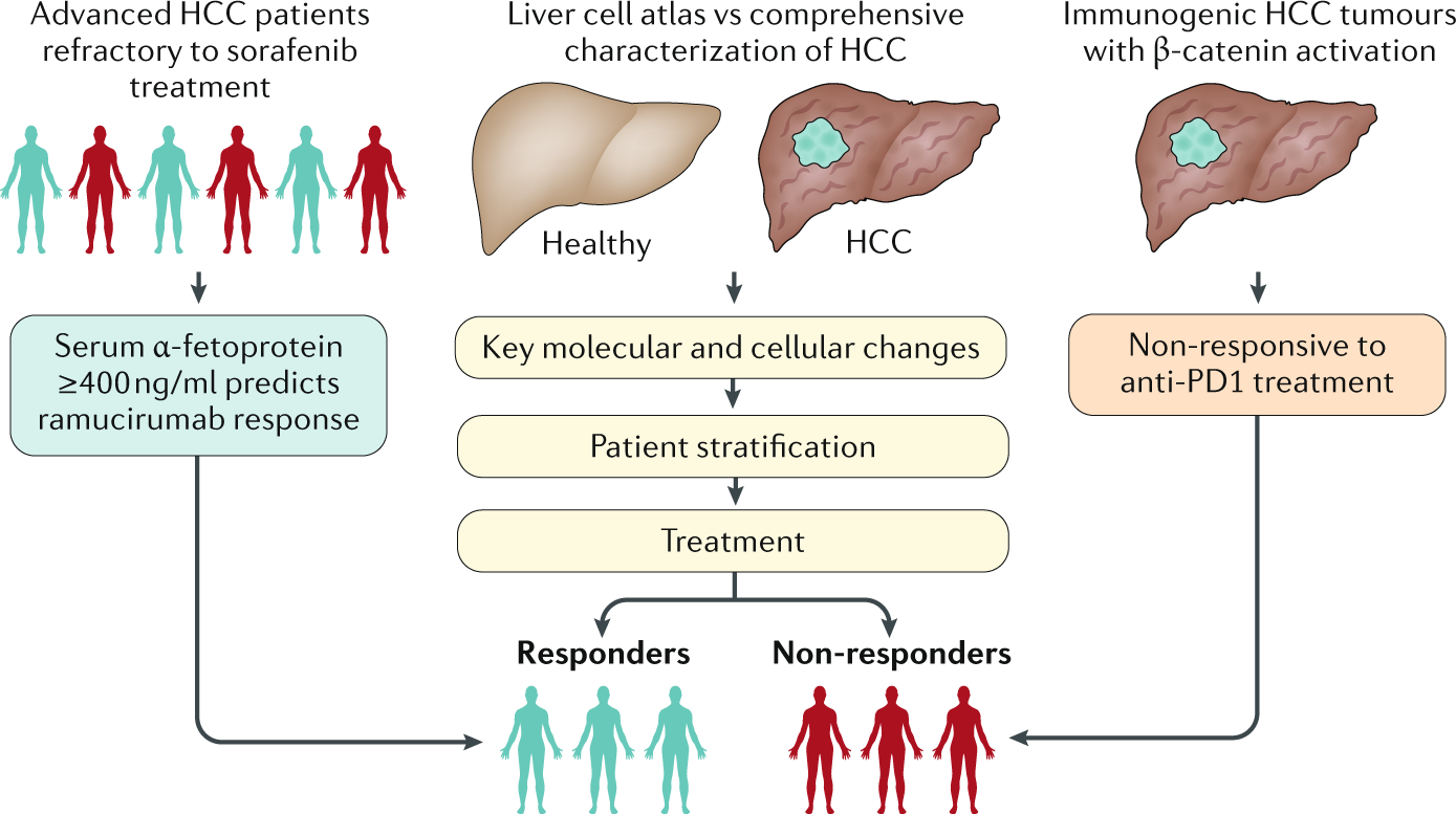 Joining the dots for better liver cancer treatment