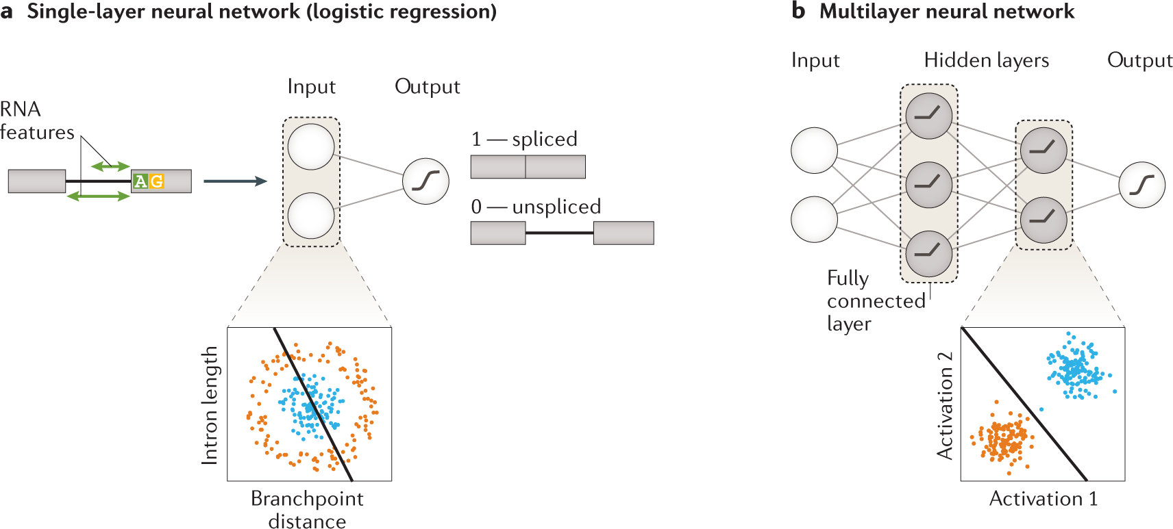 Deep learning: new computational modelling techniques for genomics
