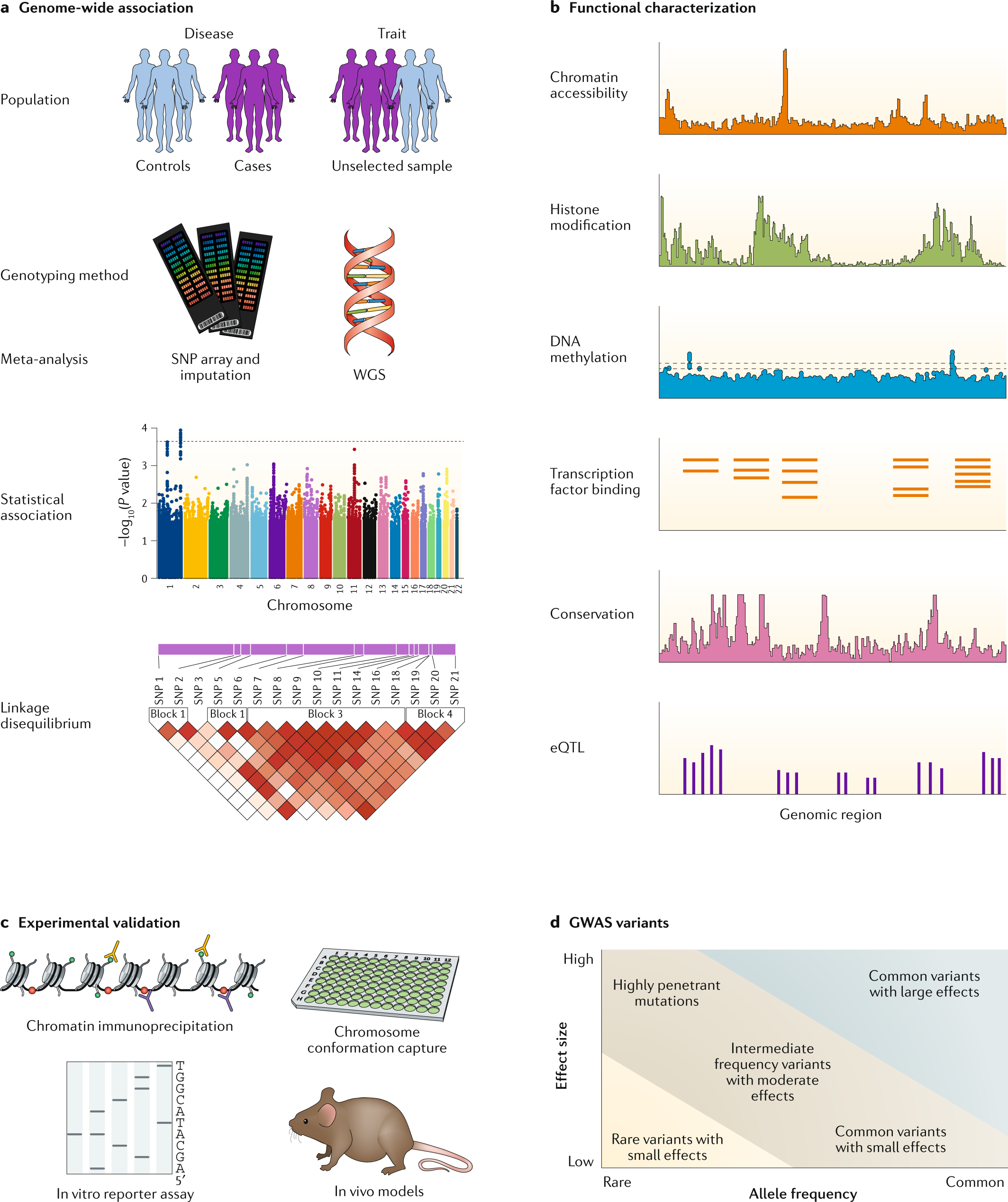 Benefits and limitations of genome-wide association studies